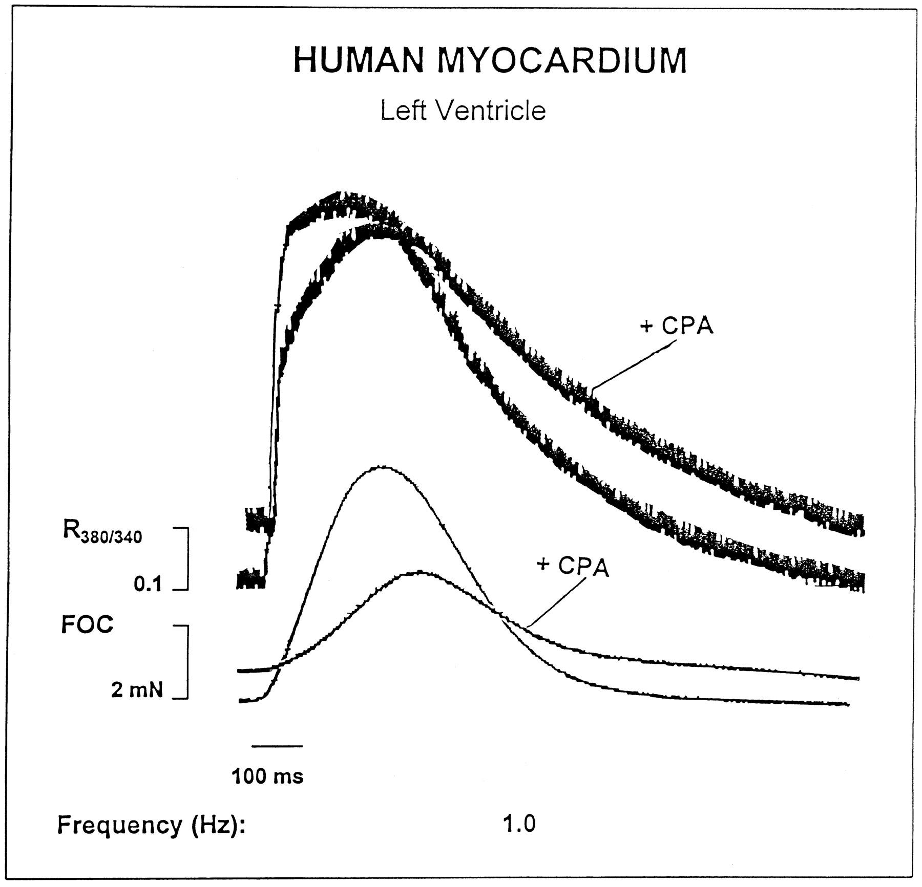 Effect of Cyclopiazonic Acid on the Force-Frequency