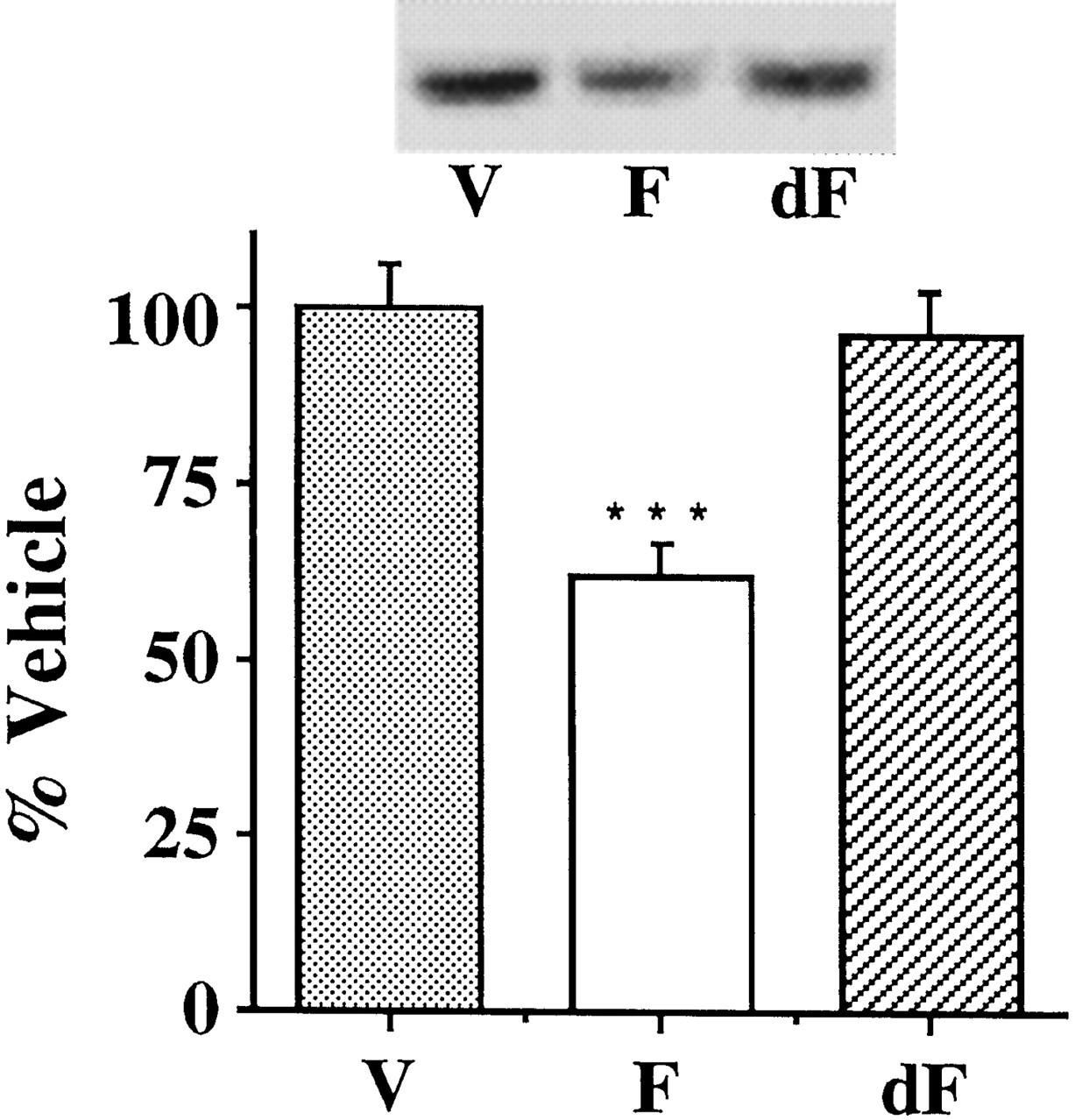 Protein shake weight loss india photo 3