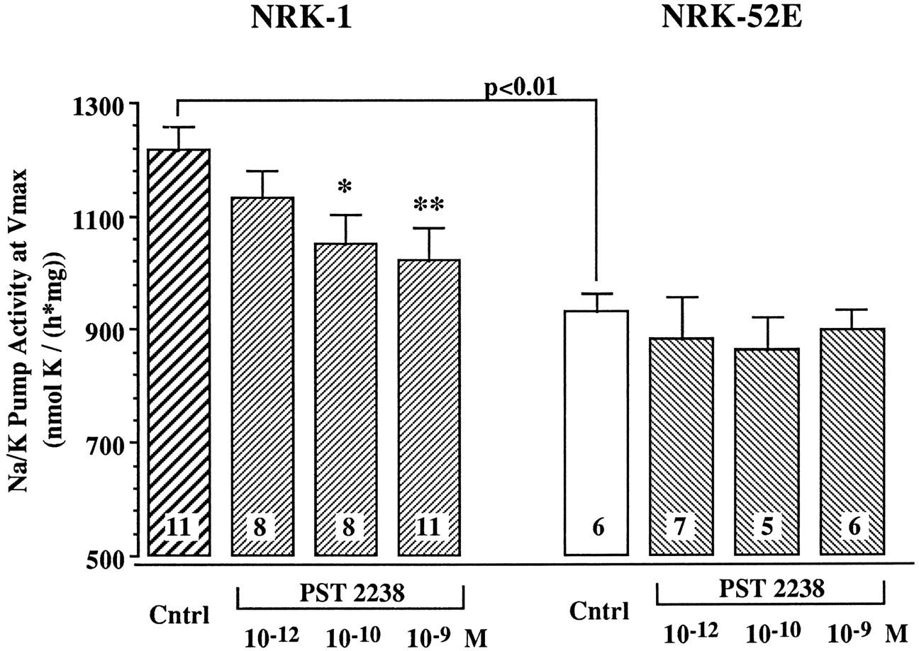 Pst 2238 A New Antihypertensive Compound That Modulates Nak Atpase Rat Skeleton Diagram Download Figure