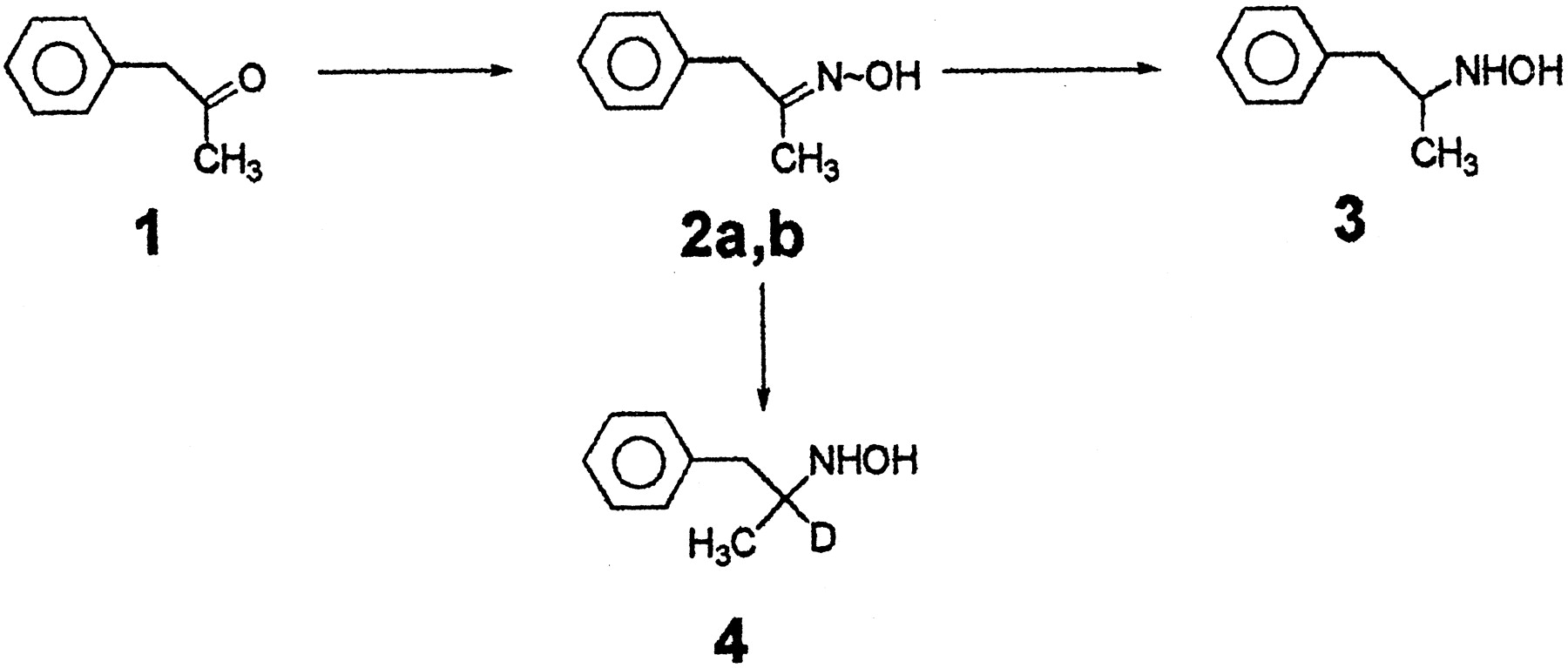 N-Oxygenation of Amphetamine and Methamphetamine by the