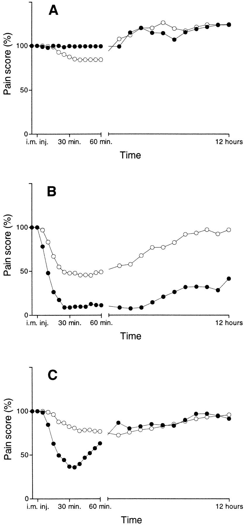 Prolonged Analgesic Effect of Ketamine, anN-Methyl-d