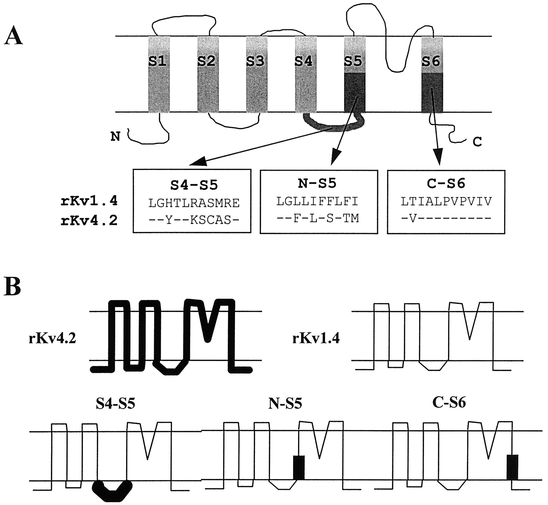Different State Dependencies Of 4 Aminopyridine Binding To Rkv14 Figure1 Cell Phone Jammer Circuit Diagram Download Figure Open In New Tab Powerpoint 1 A Schematic