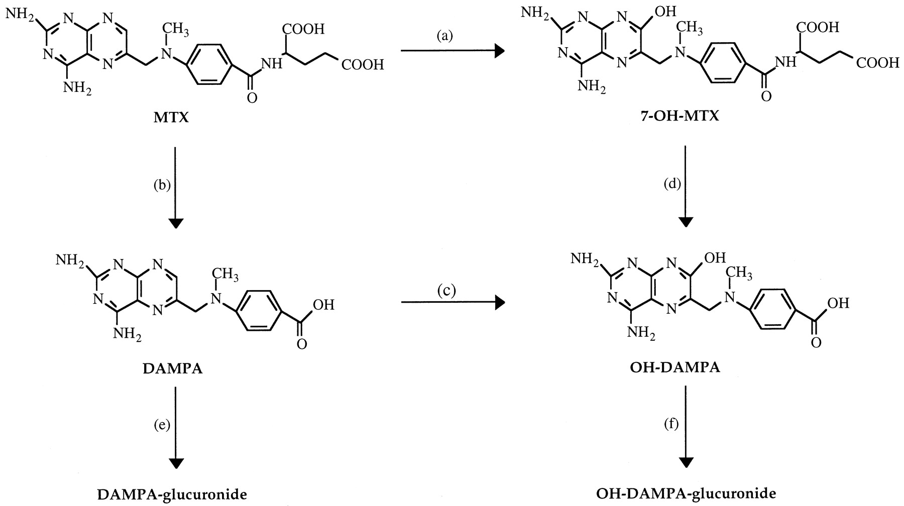 Pharmacokinetics and Metabolism of the Methotrexate Metabolite 2,4
