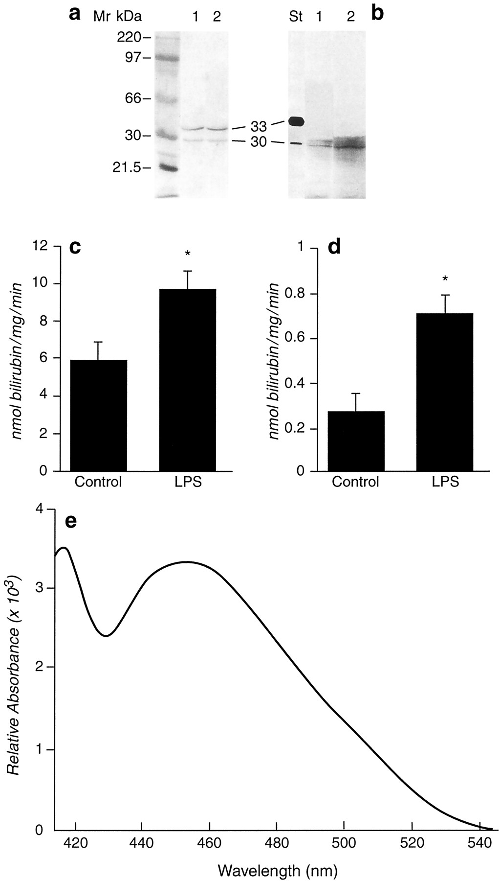 Nuclear Localization of Biliverdin Reductase in the Rat