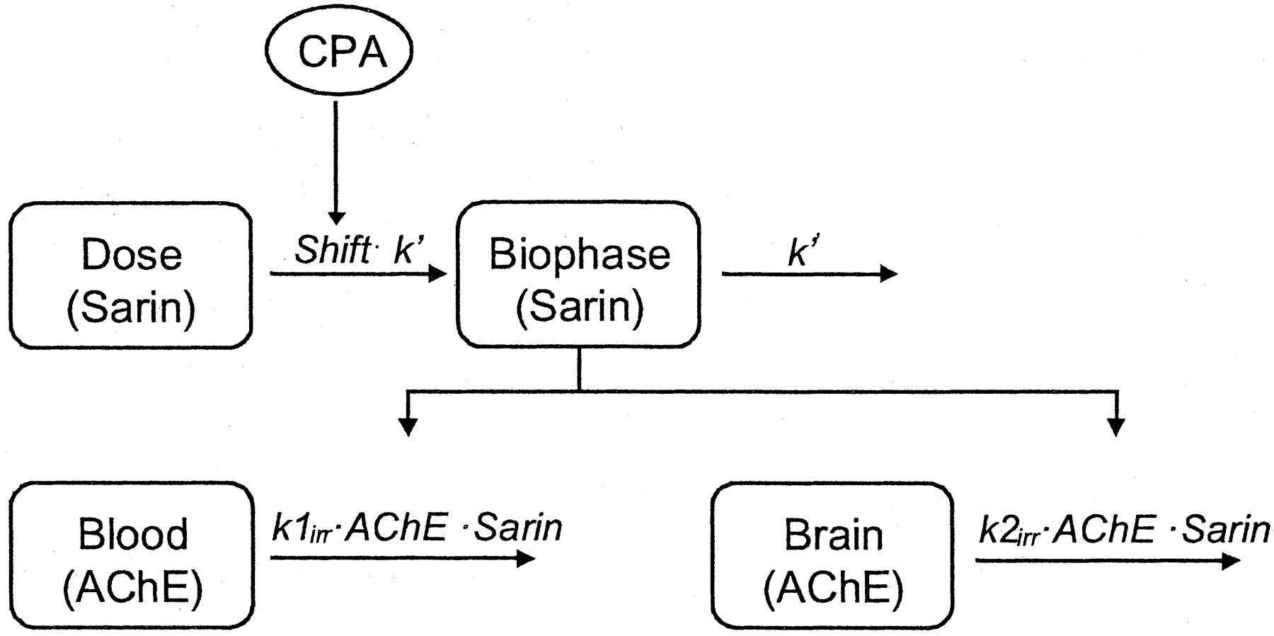 Adenosine A1 Receptor AgonistN 6-Cyclopentyladenosine