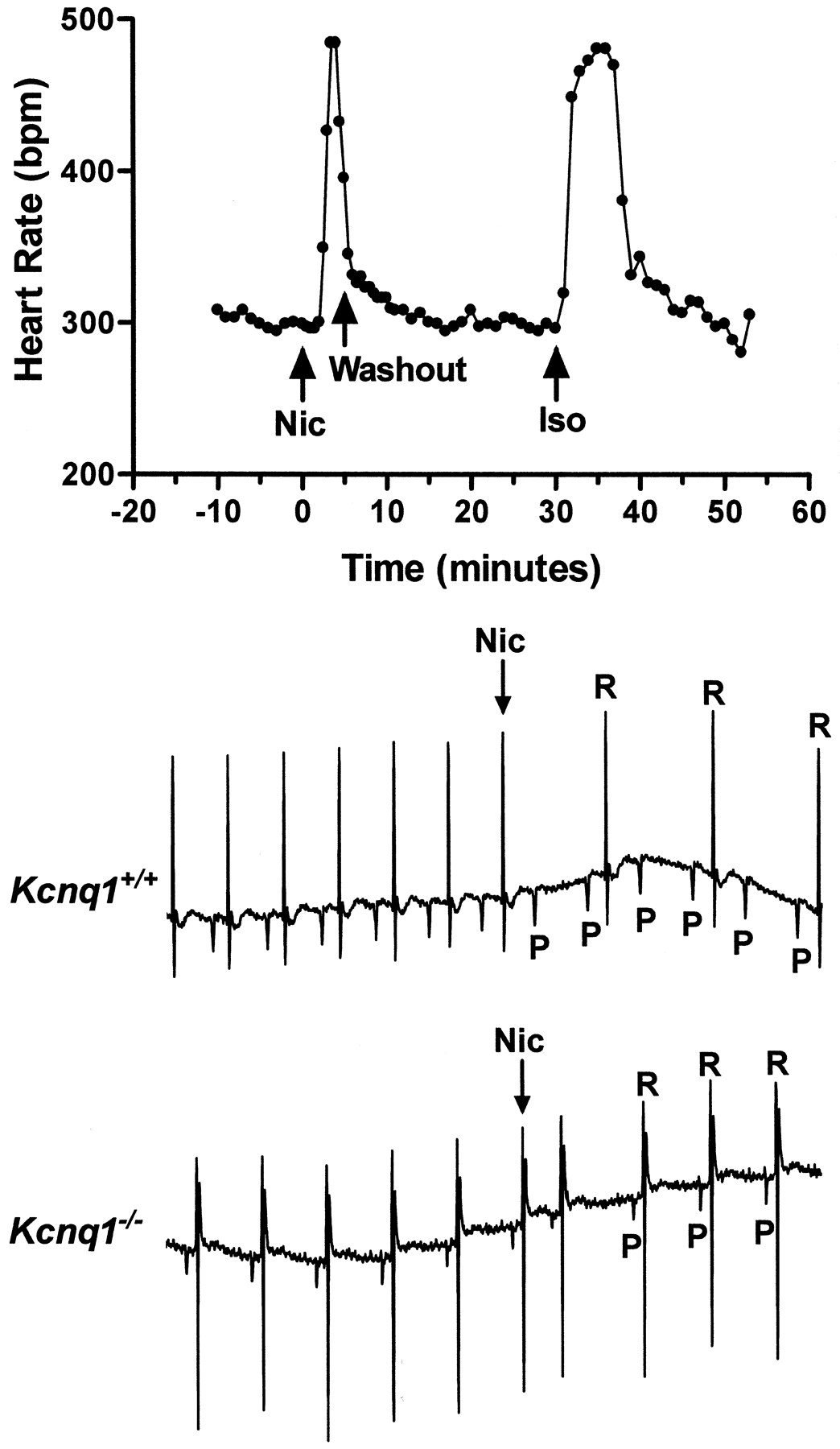 Nicotine Induces a Long QT Phenotype in Kcnq1-Deficient