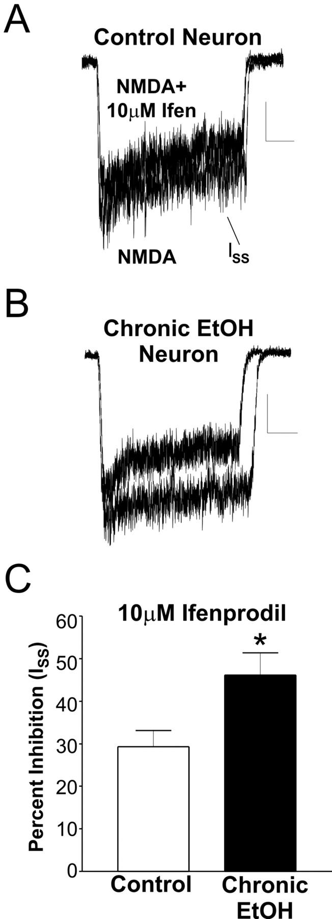 Chronic Ethanol Ingestion Facilitates N Methyl D Aspartate Receptor
