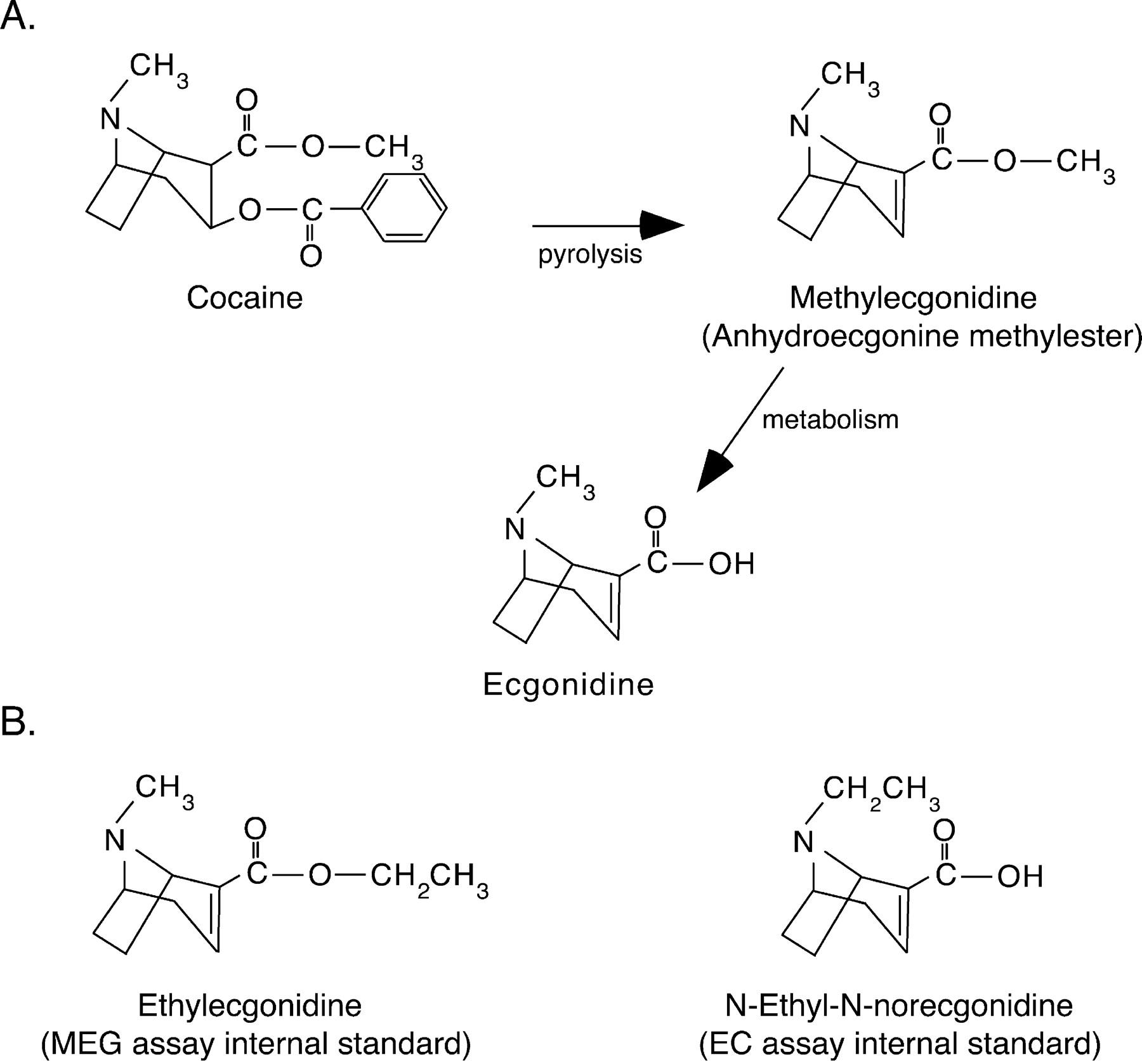 Pharmacokinetics and Pharmacodynamics of Methylecgonidine, a Crack