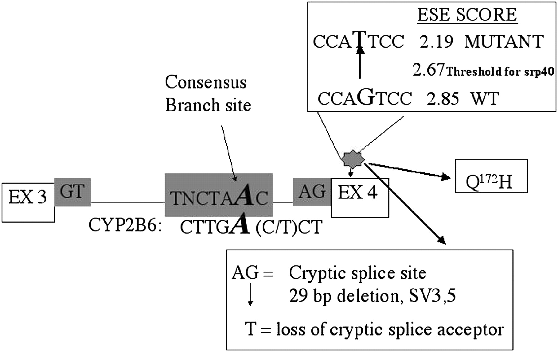 Hepatic Cyp2b6 Expression Gender And Ethnic Differences Free Download Inf4 Wiring Diagram Figure