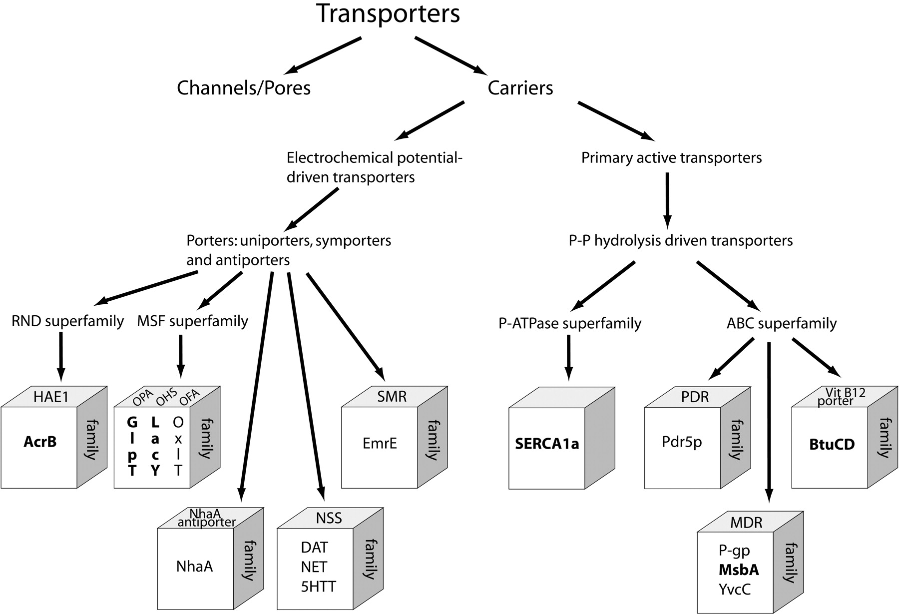 Structures and Models of Transporter Proteins | Journal of