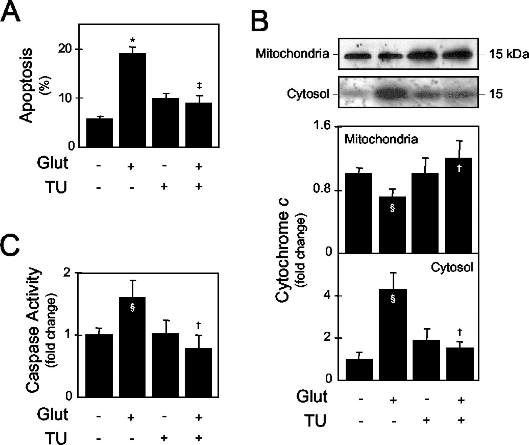 The Bile Acid Tauroursodeoxycholic Acid Modulates Phosphorylation