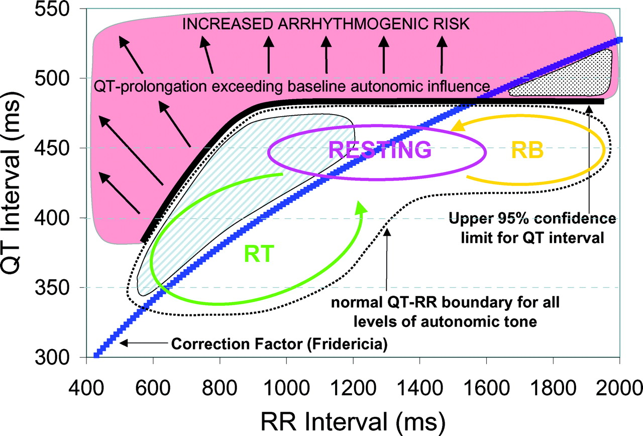 Dynamic Beat-to-Beat Modeling of the QT-RR Interval Relationship