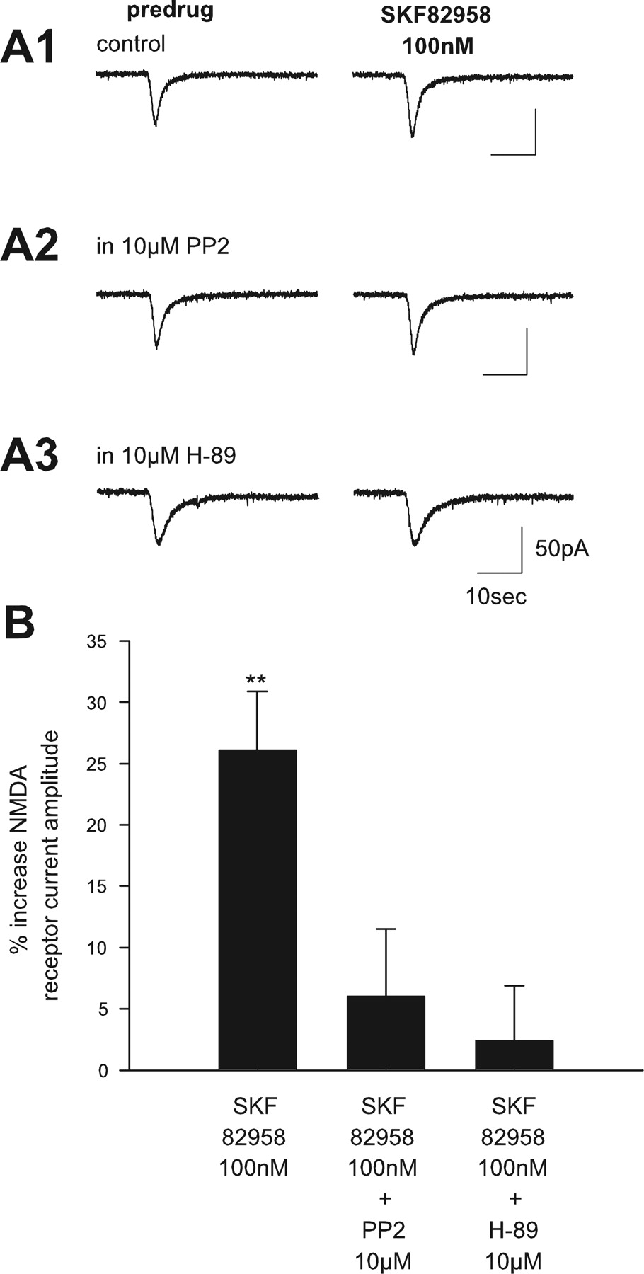 Clozapine Potentiation of N-Methyl-d-aspartate Receptor