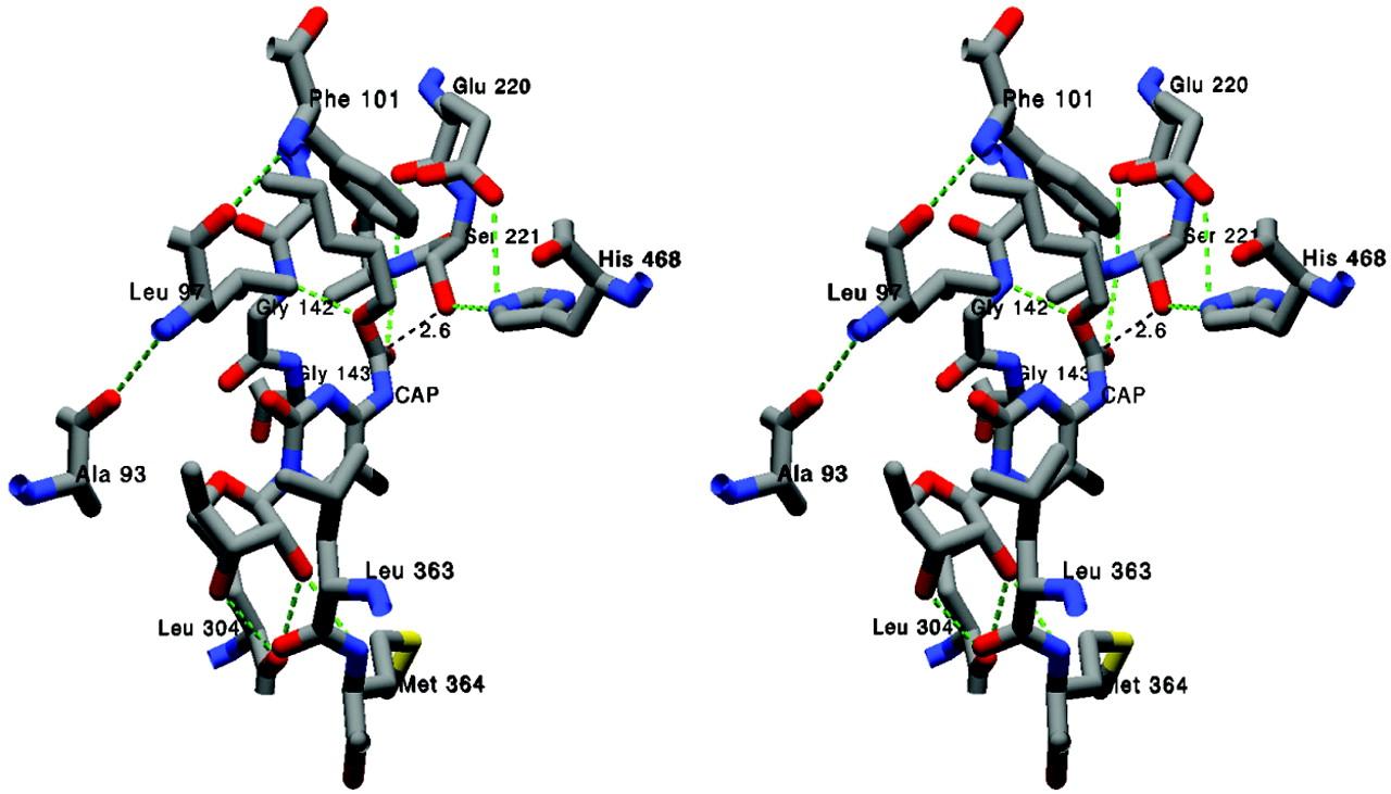 Hydrolysis of Capecitabine to 5′-Deoxy-5-fluorocytidine by Human ...