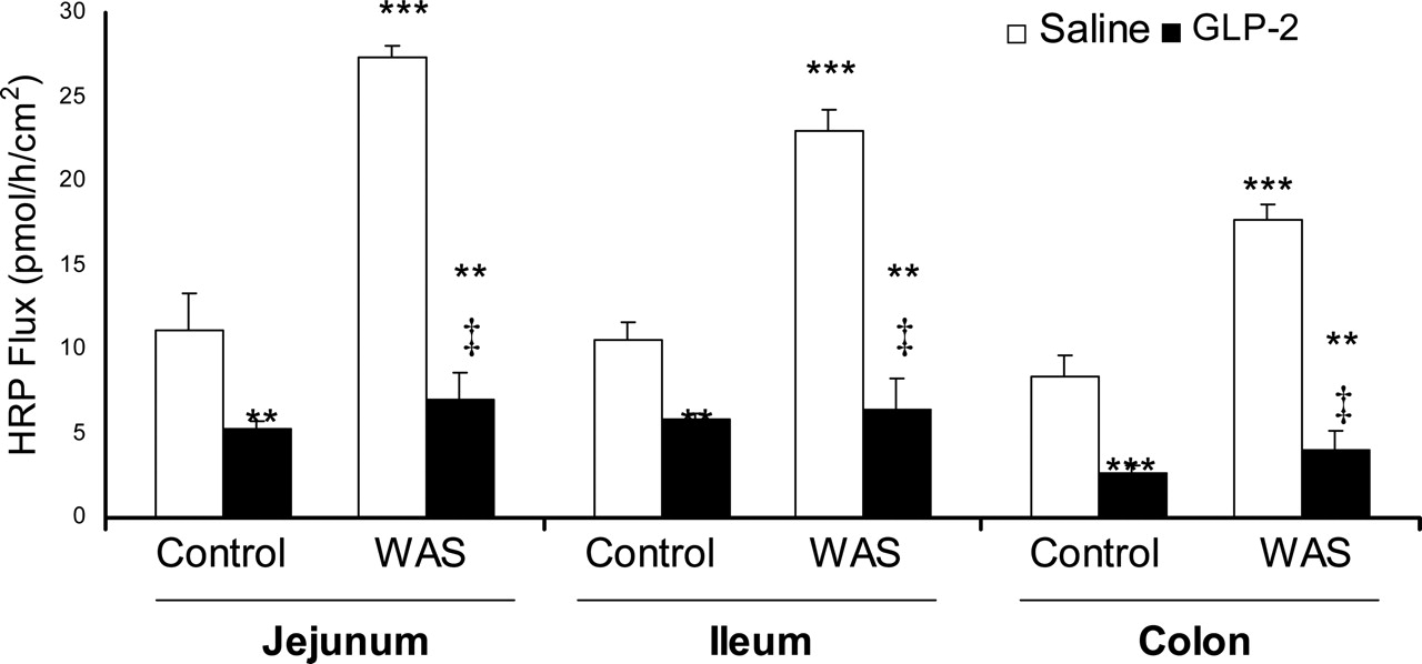 Stress Impairs Murine Intestinal Barrier Function: Improvement by