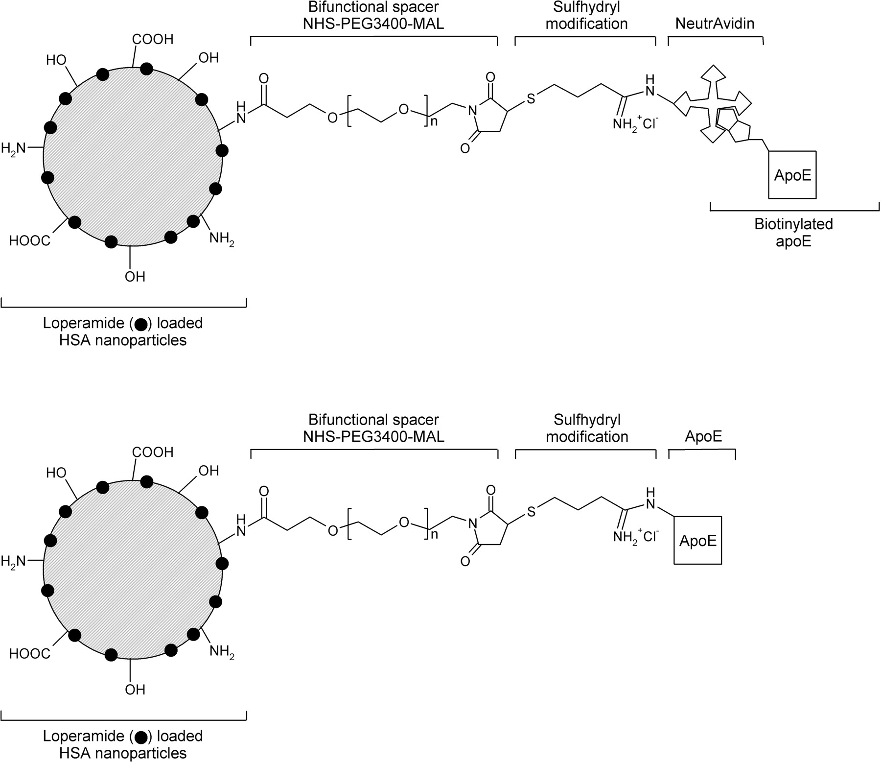 Apolipoprotein e structure-function relationships dating