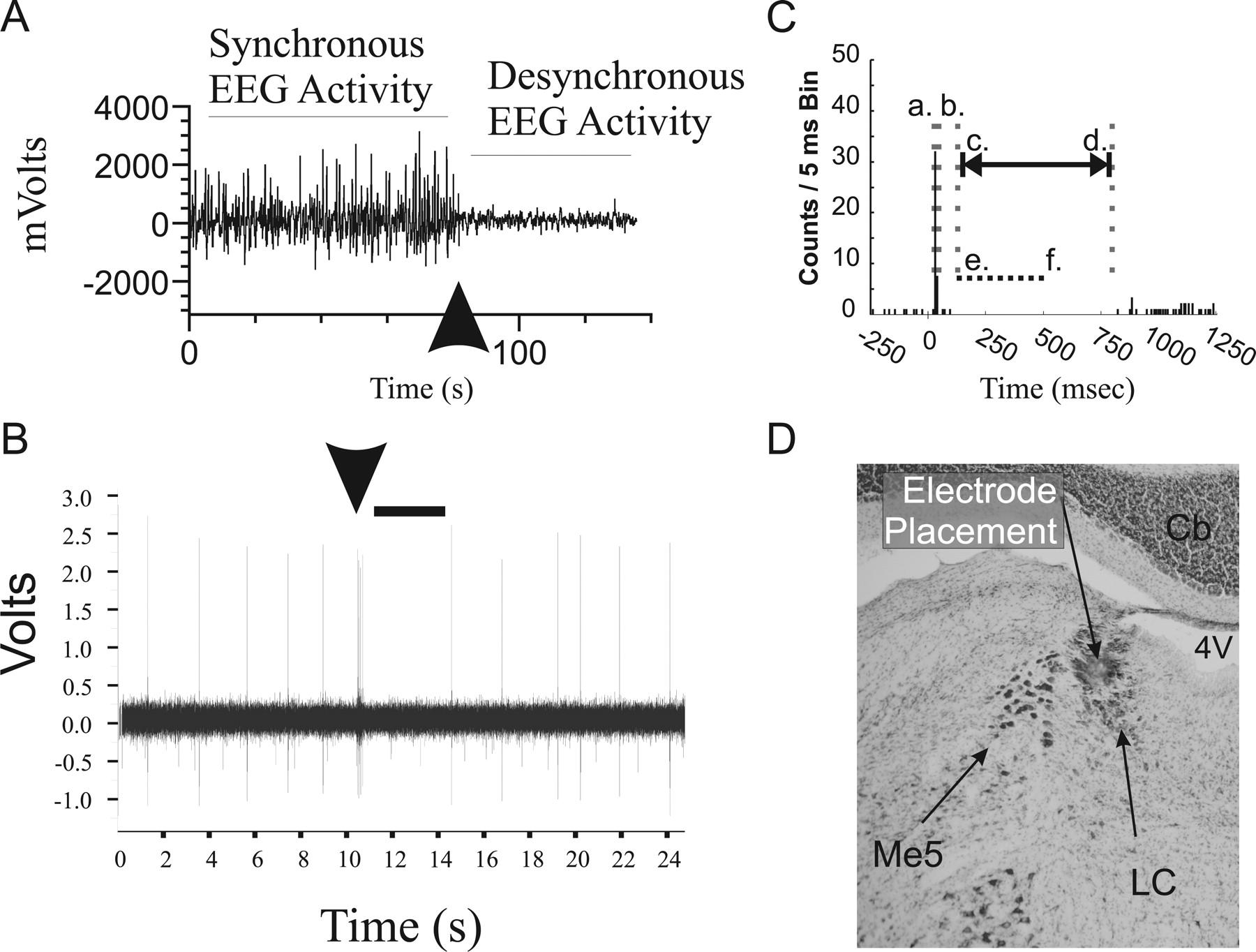 Low-Dose Methylphenidate Actions on Tonic and Phasic Locus Coeruleus ...