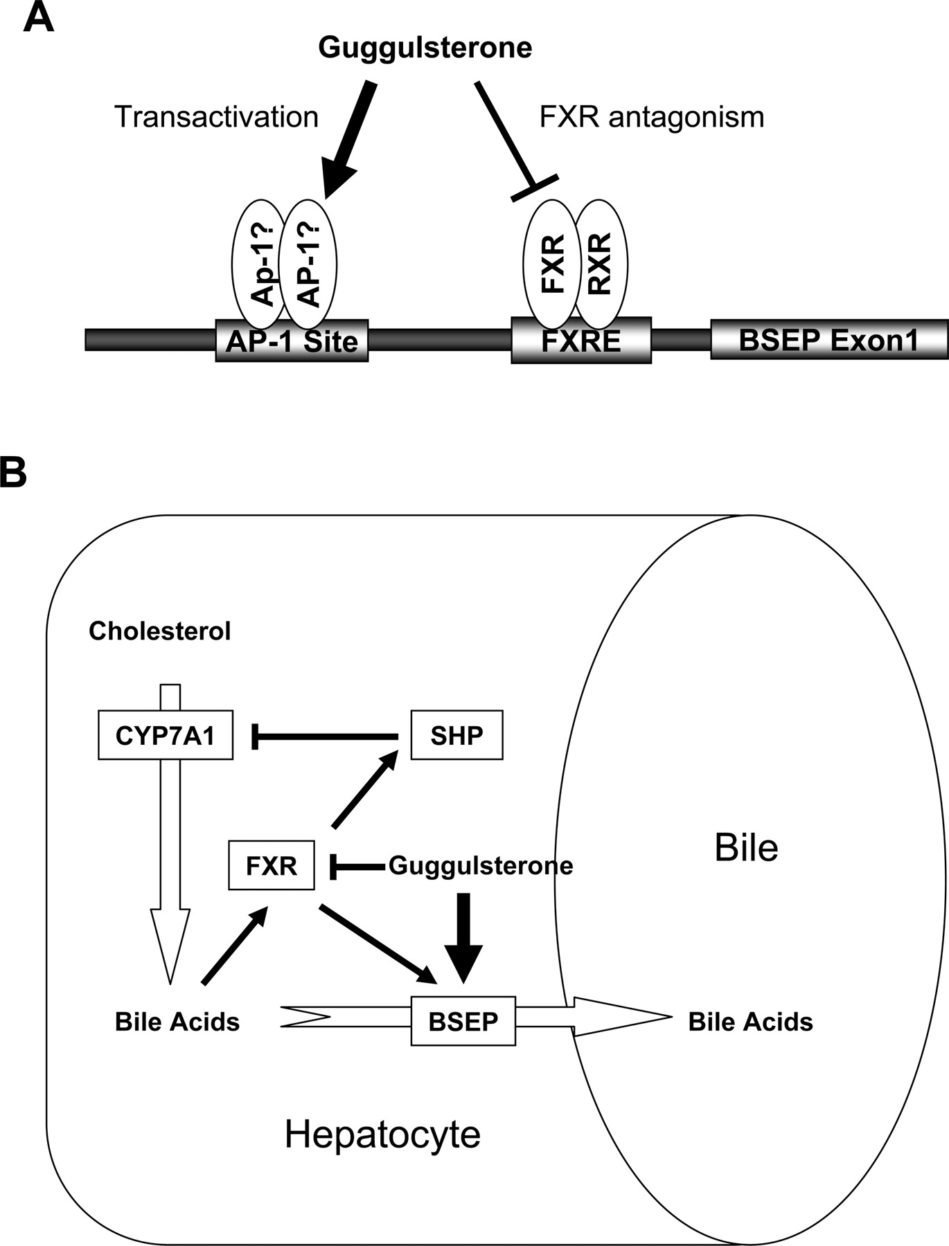 The Hypolipidemic Agent Guggulsterone Regulates the Expression of ...