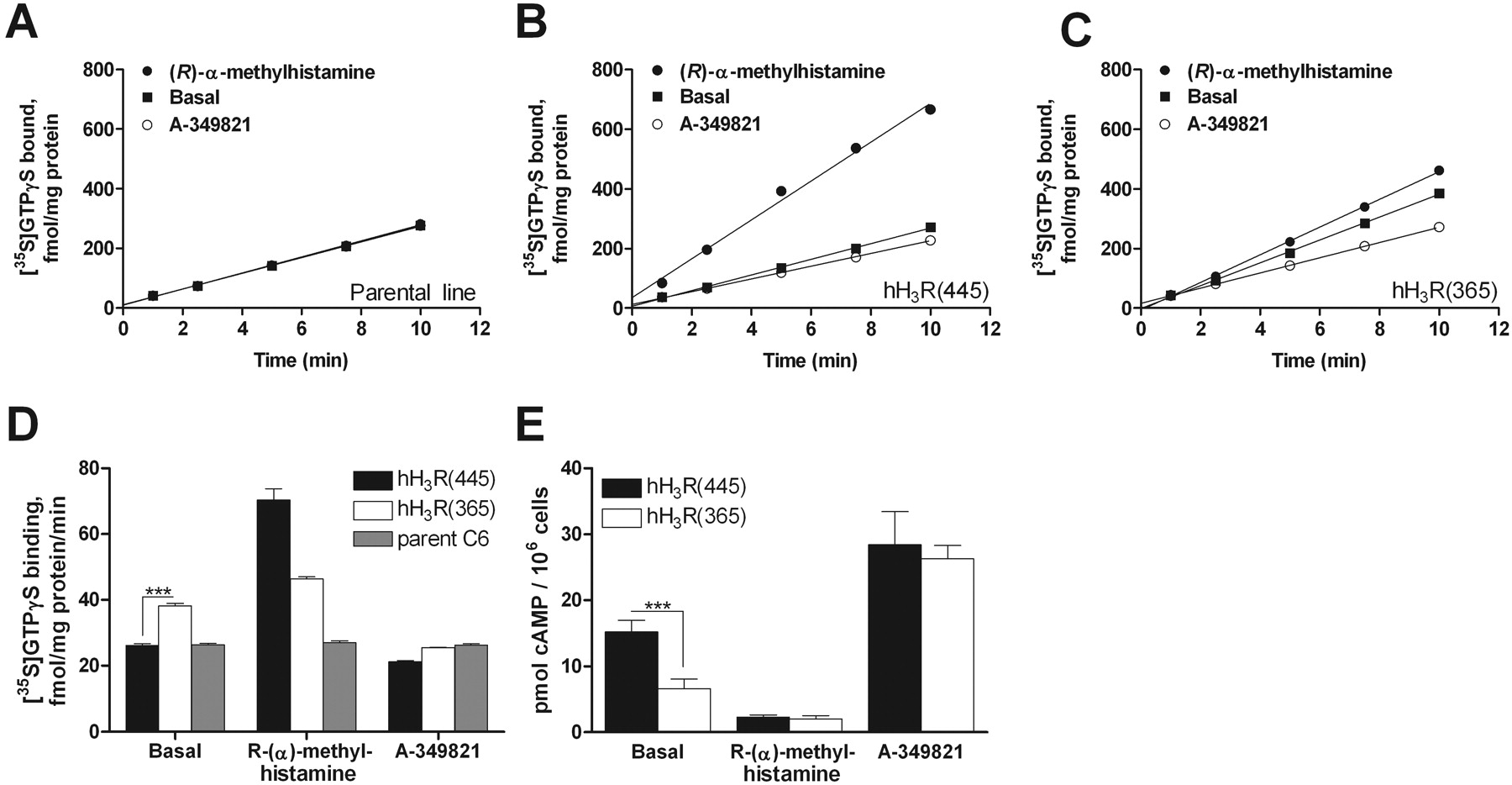 An 80-Amino Acid Deletion in t...