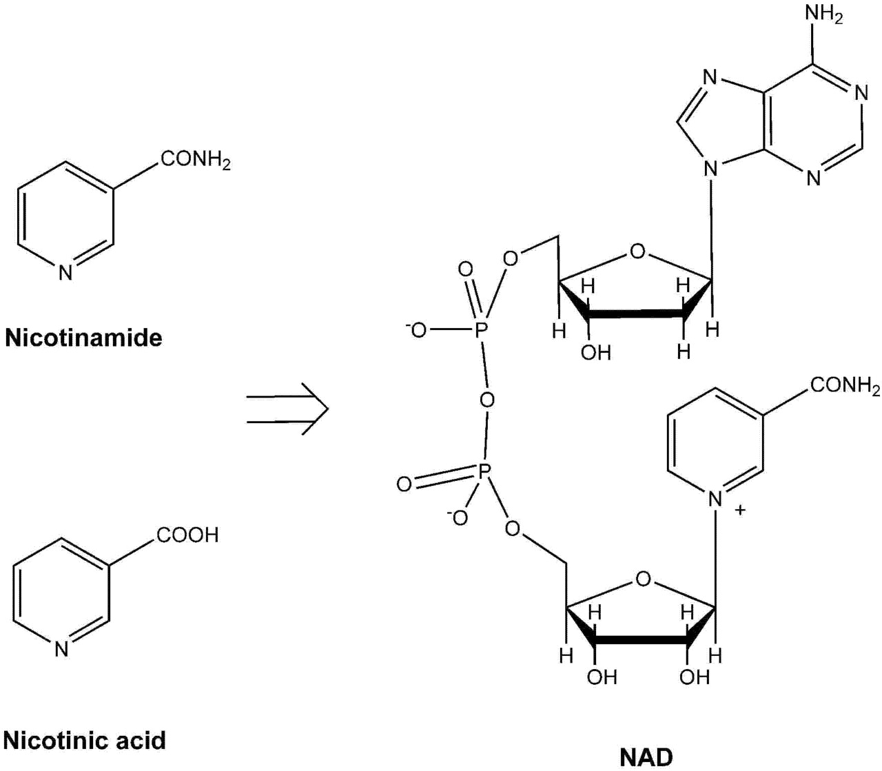 NAD+ And Vitamin B3: From Metabolism To Therapies