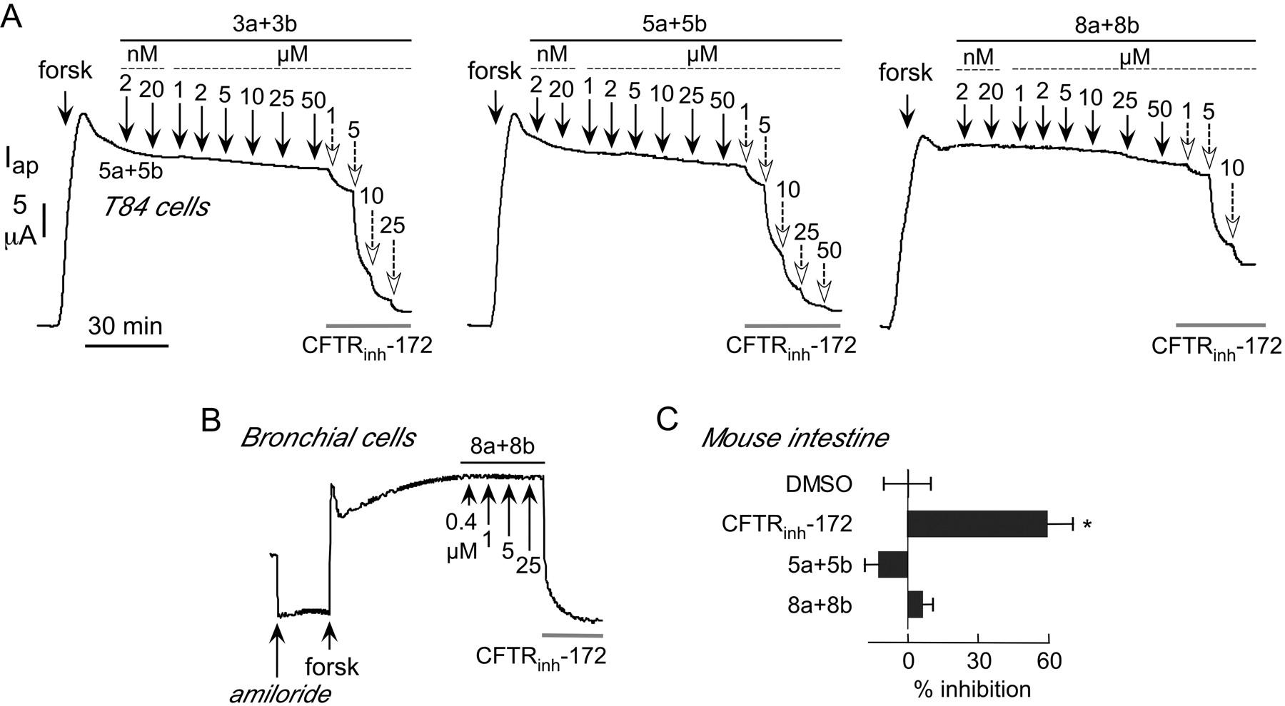 Aminoazaheterocyclic Methylglyoxal Adducts Do Not Inhibit Cystic Shortcircuit Analysis Download Figure
