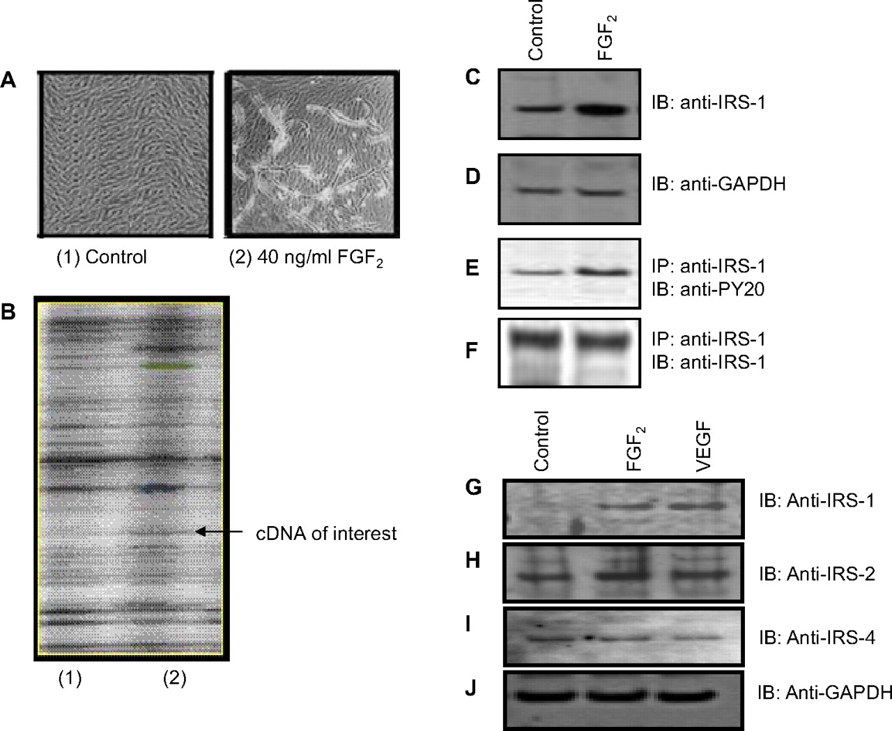 Potent in Vivo Antiangiogenic Effects of GS-101 (5 ...