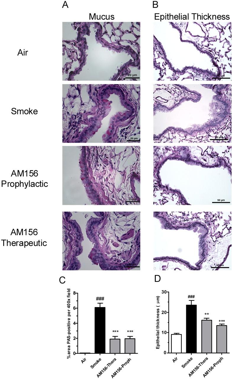 Pharmacological Blockade of the DP2 Receptor Inhibits Cigarette