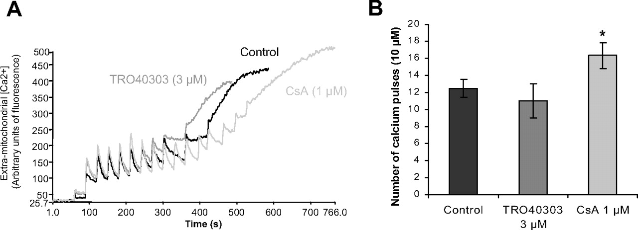 TRO40303, a New Cardioprotective Compound, Inhibits