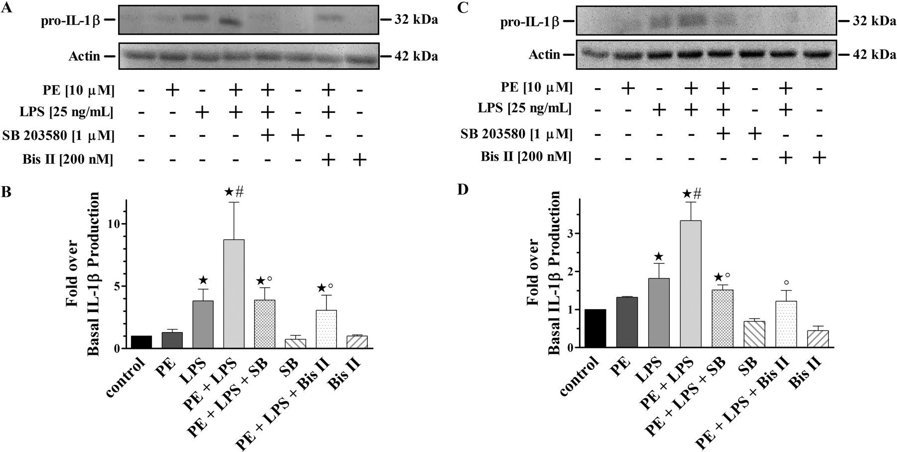 α1-Adrenergic Receptors Positively Regulate Toll-Like