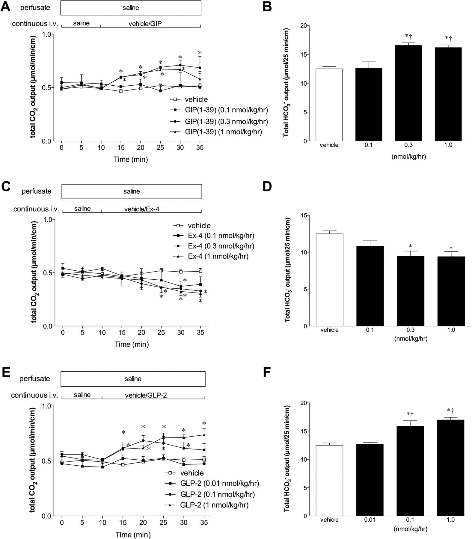 Umami Receptor Activation Increases Duodenal Bicarbonate Secretion