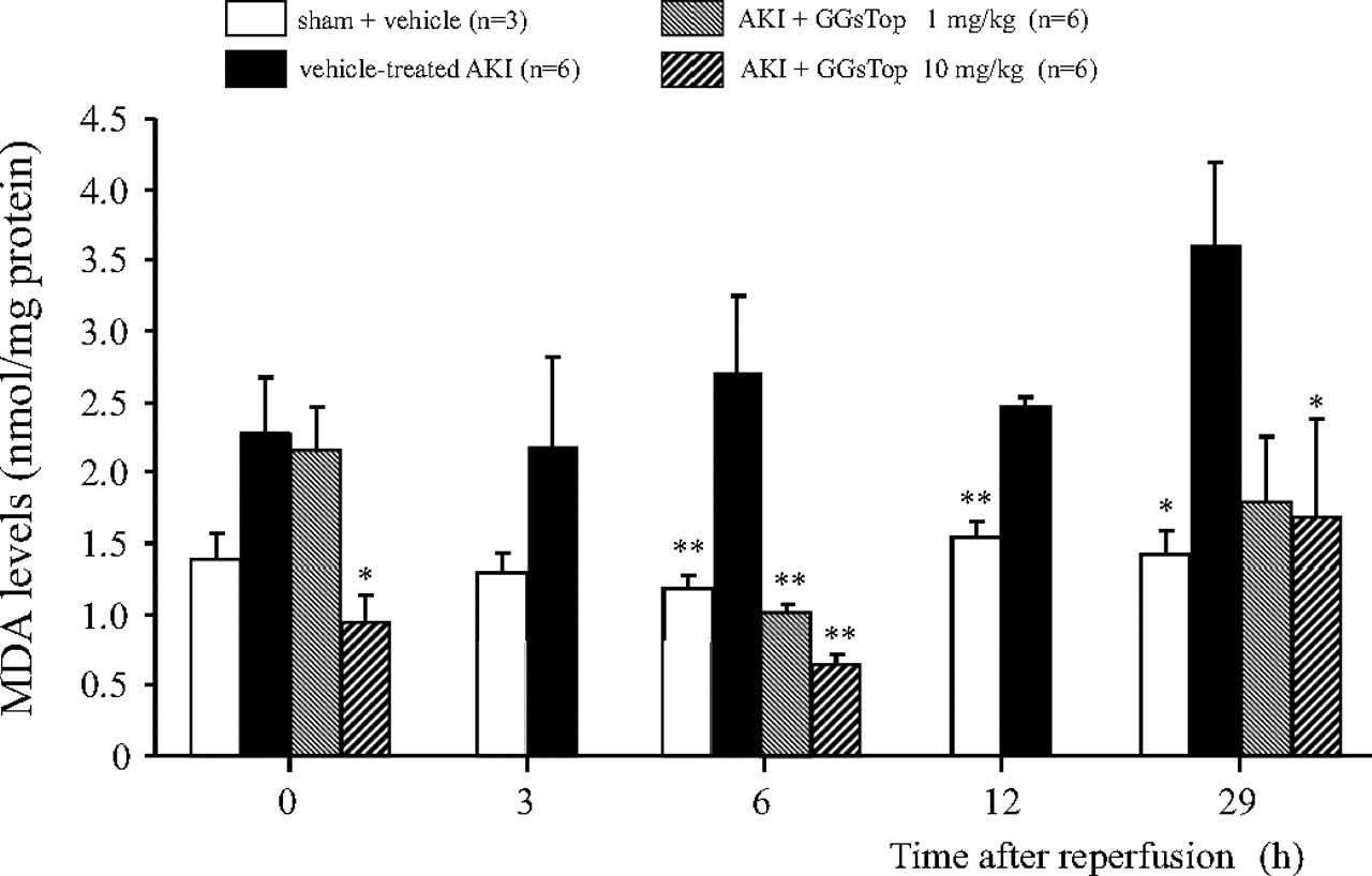 Preventive Effect Of Ggstop A Novel And Selective Glutamyl Pure Apnea Level 1 Course Download Figure
