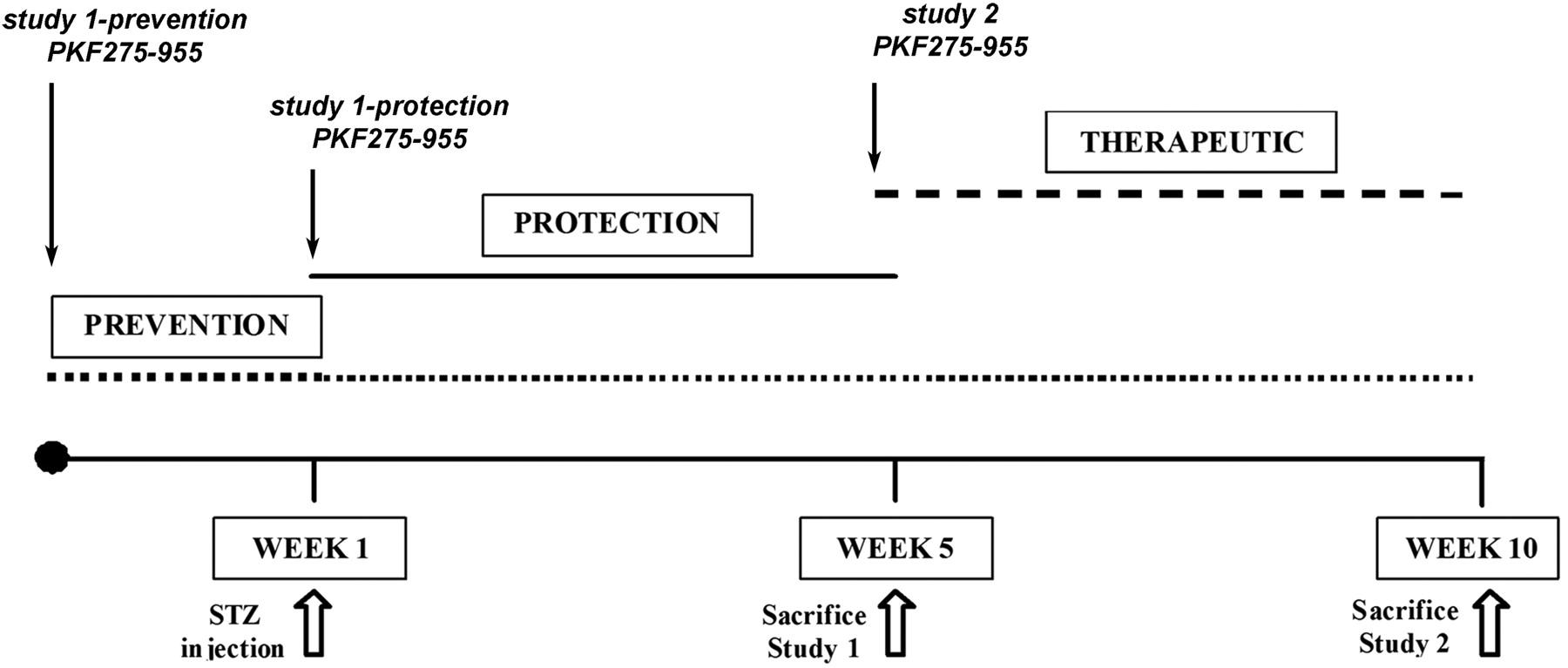 Beneficial effects of pkf275 055 a novel selective orally download figure geenschuldenfo Gallery