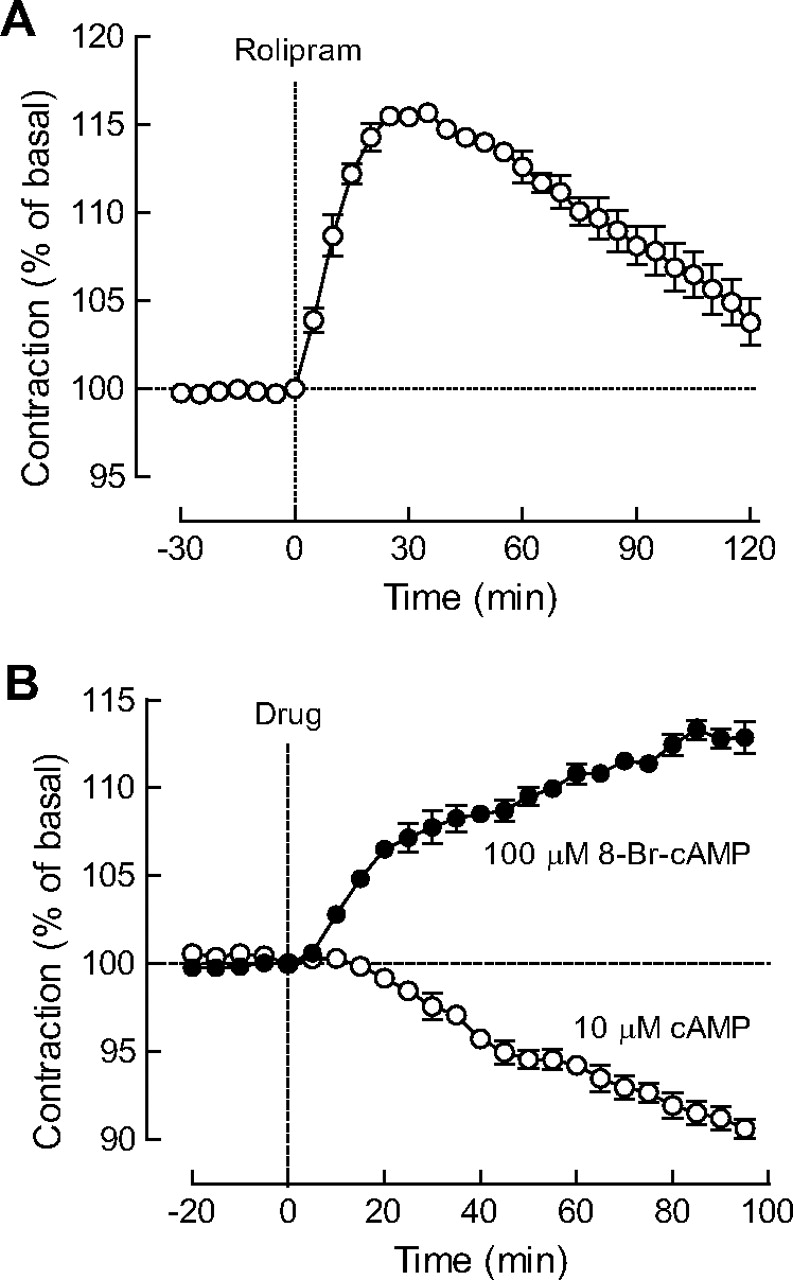 Contribution of the Extracellular cAMP-Adenosine Pathway to