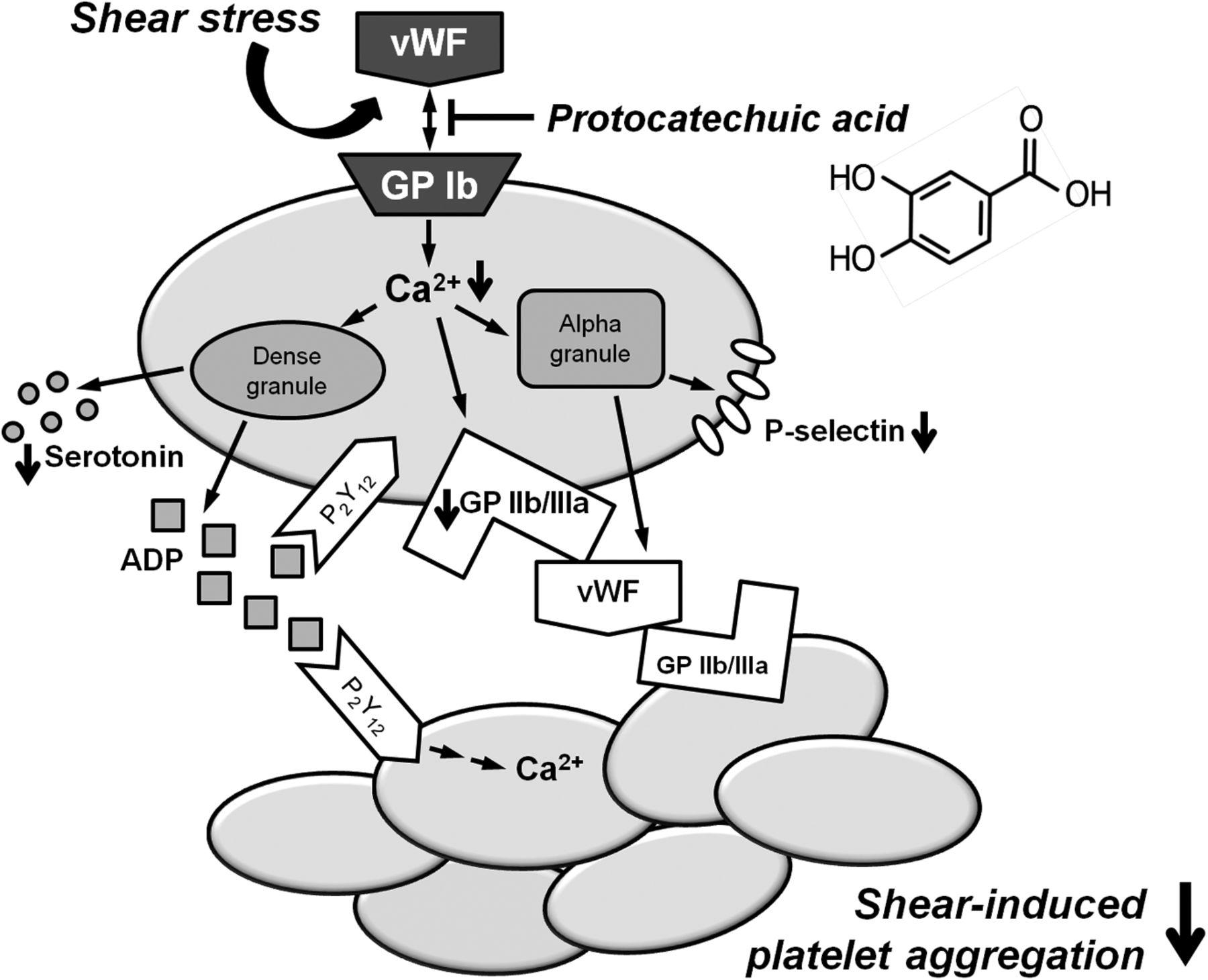 Novel Antiplatelet Activity Of Protocatechuic Acid Through The M Audio Bx5a Circuit Diagram Download Figure