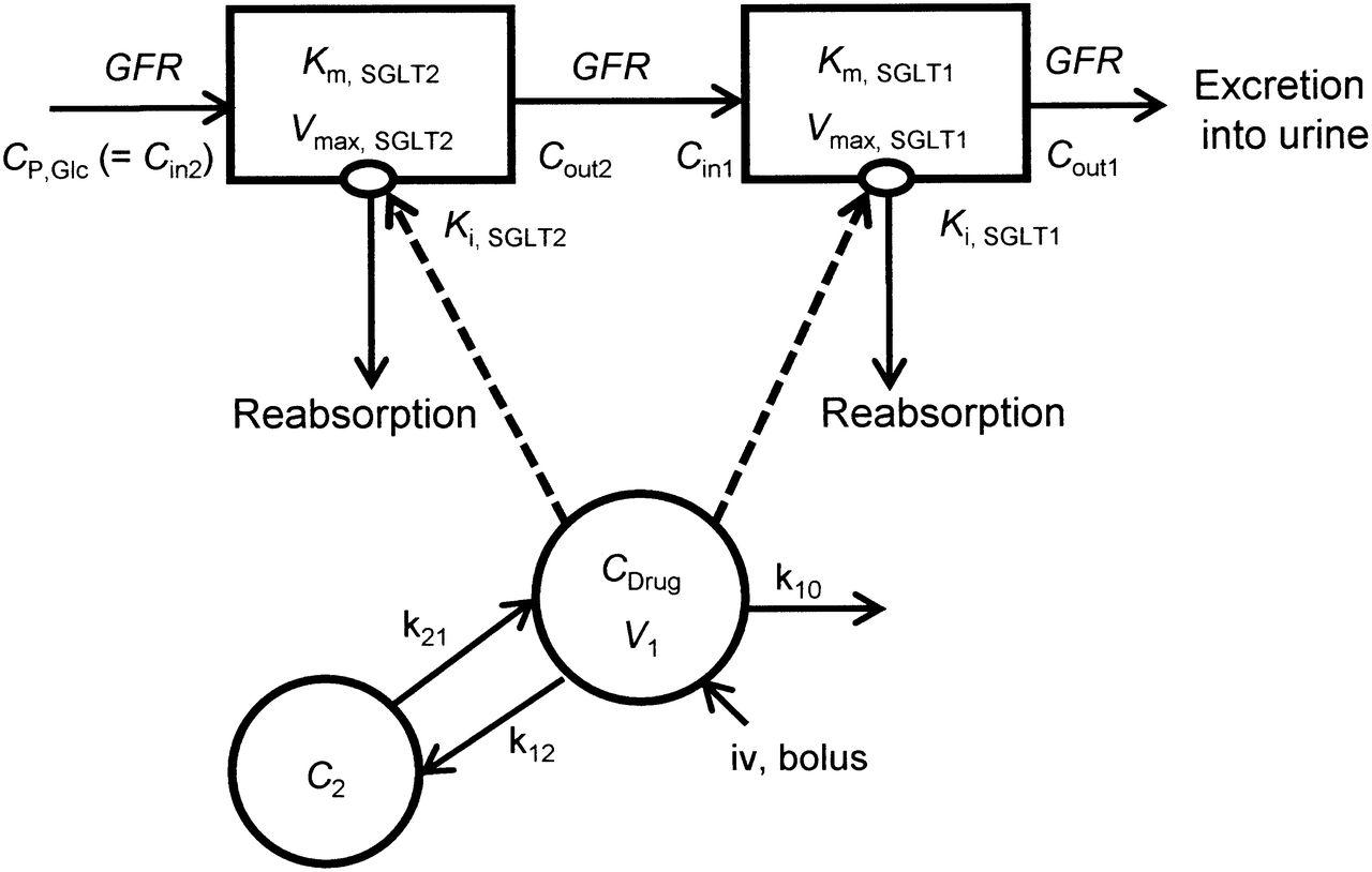 In Vitro–In Vivo Correlation of the Inhibition Potency of