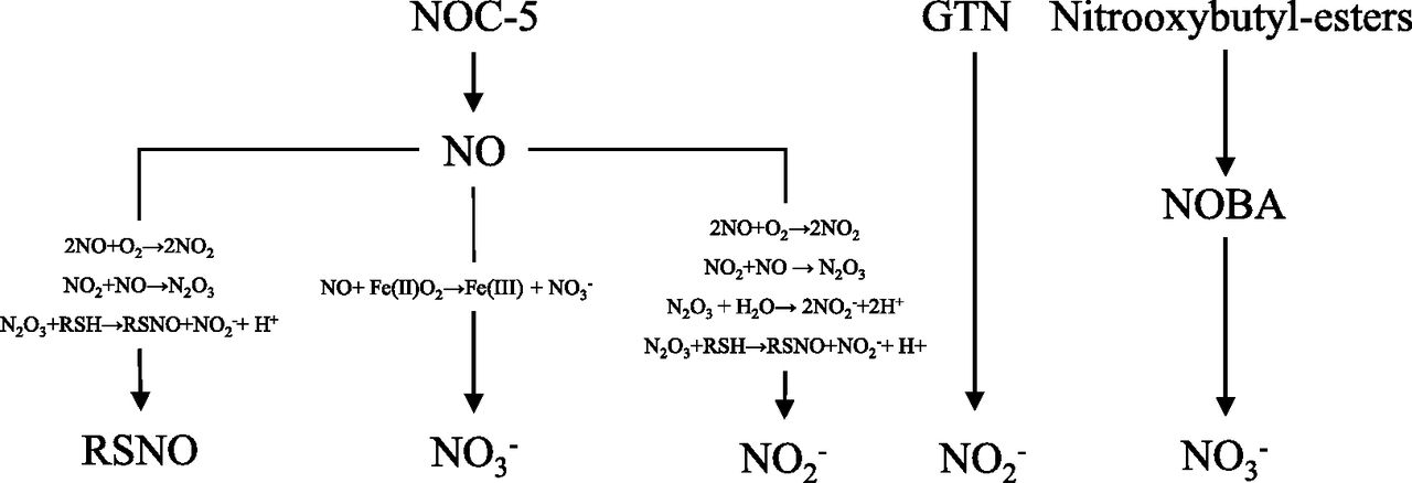 Metabolism And Pathways For Denitration Of Organic Nitrates In The