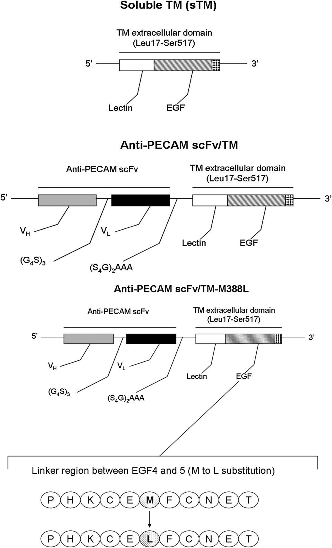 Platelet Endothelial Cell Adhesion Molecule Targeted Oxidant Ttc M Block Diagram Download Figure