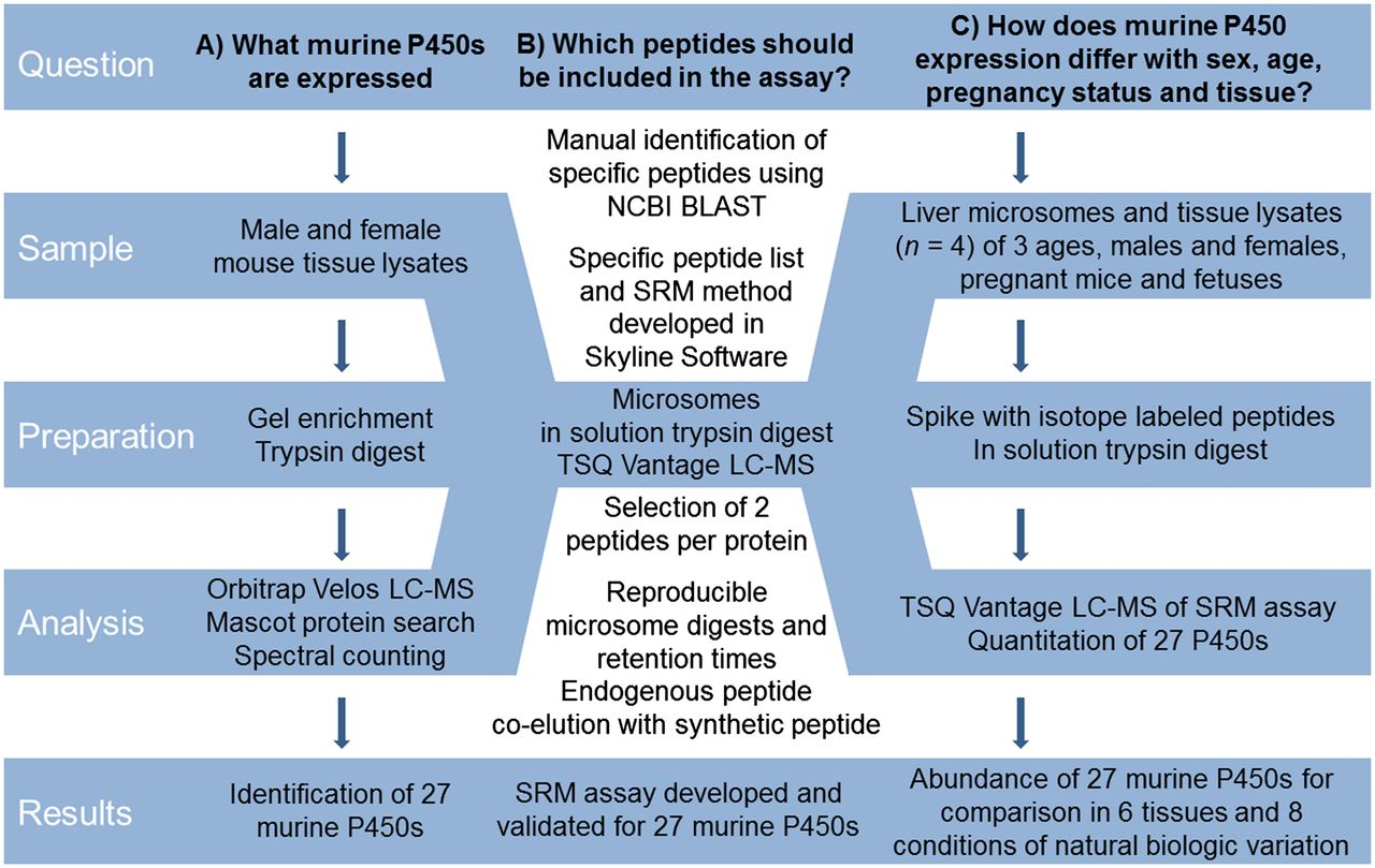 A Targeted Proteomics Approach for Profiling Murine