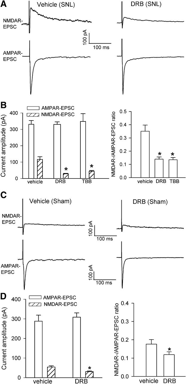 Casein Kinase II Regulates N-Methyl-d-Aspartate Receptor