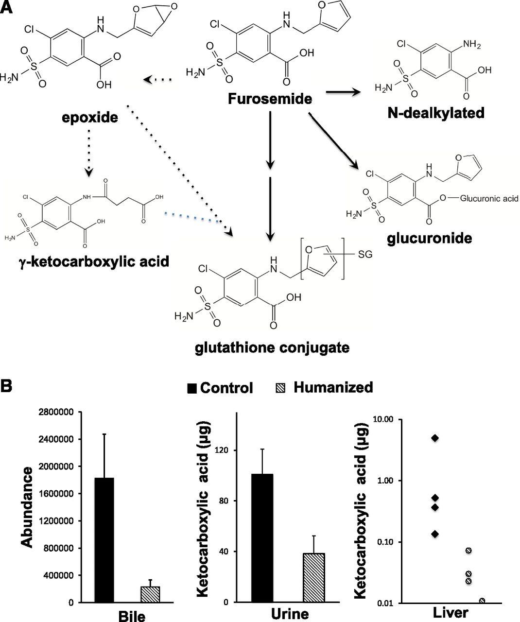 humanized thymidine kinase u2013nog mice can be used to