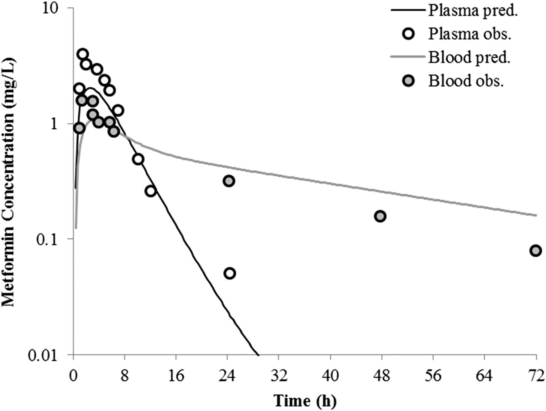 Metformin's Intrinsic Blood-to-Plasma Partition Ratio (B/P