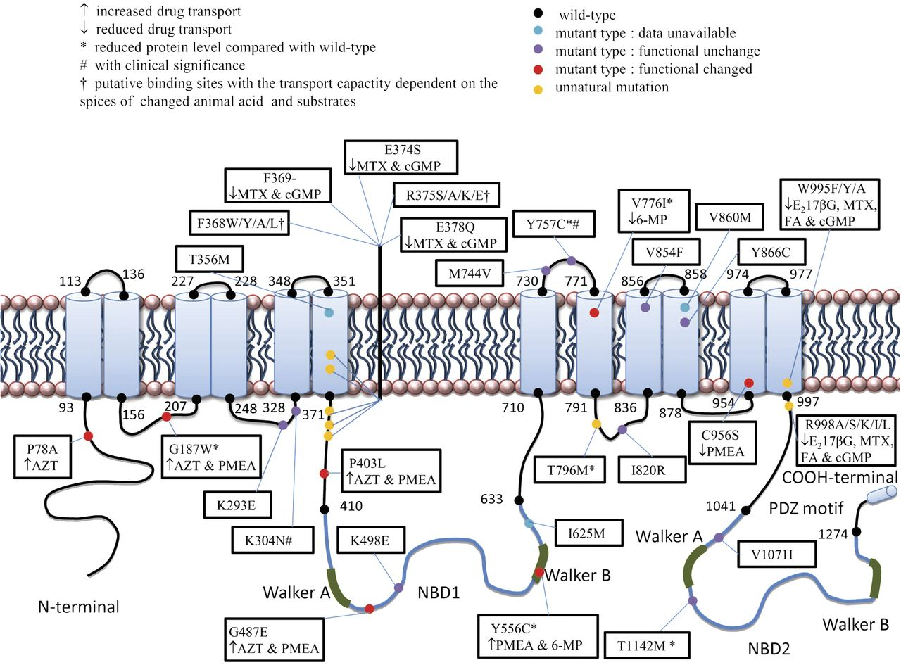 The pharmacological and physiological role of multidrug resistant download figure ccuart Images