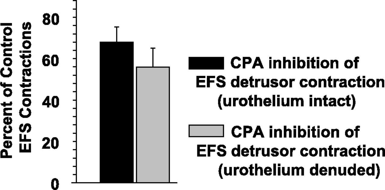 A1 Adenosine Receptor–Mediated Inhibition of Parasympathetic