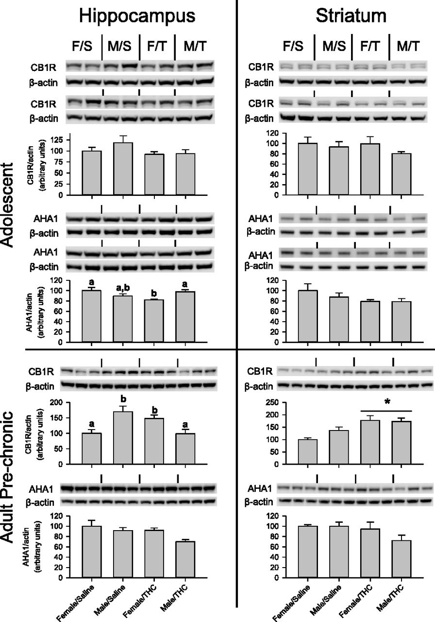 Chronic Δ9-Tetrahydrocannabinol during Adolescence Differentially