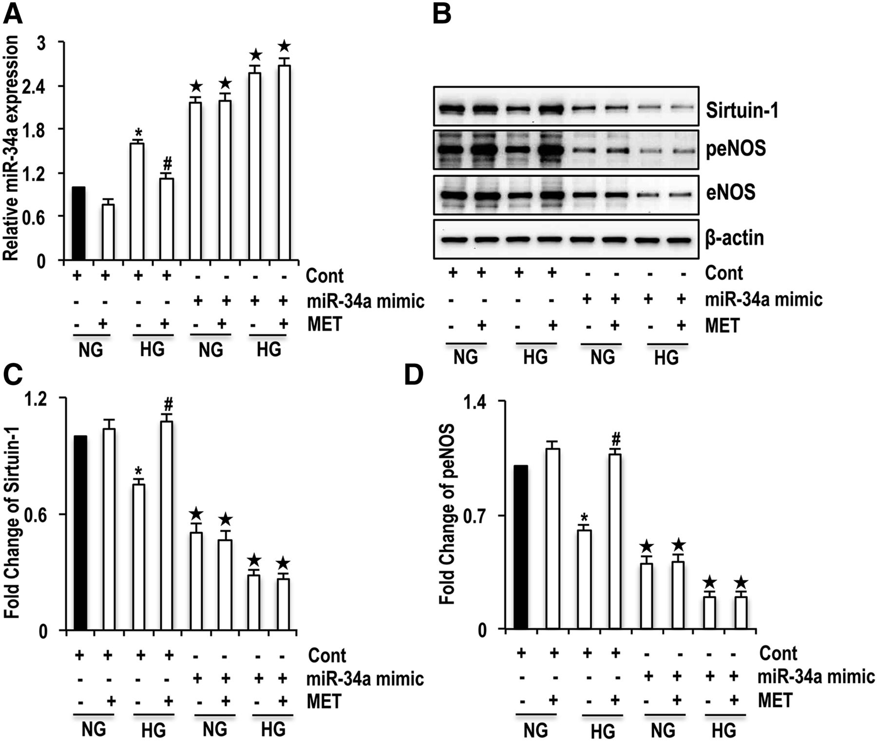 Molecular Interplay between microRNA-34a and Sirtuin1 in