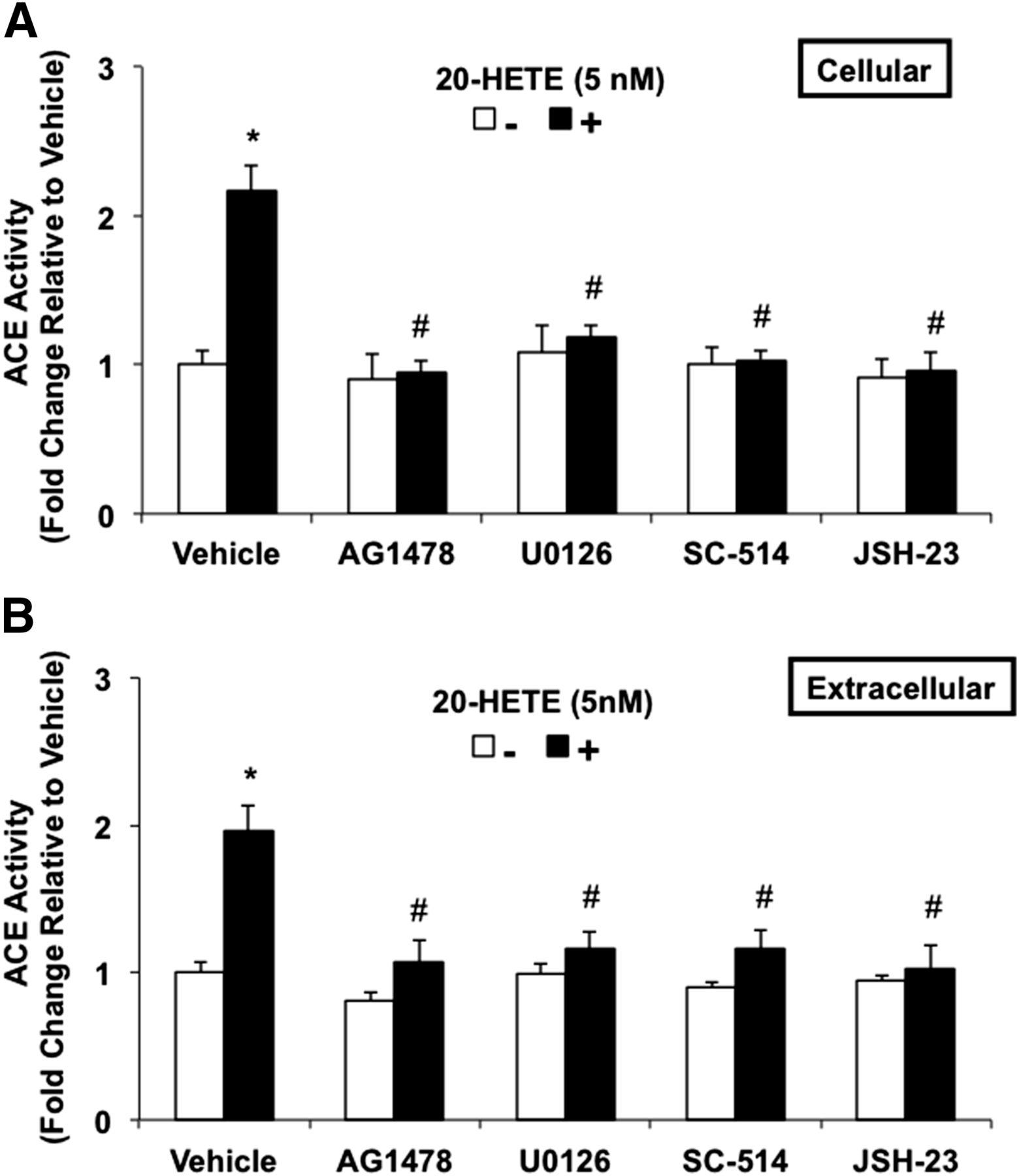 20-HETE Activates the Transcription of Angiotensin