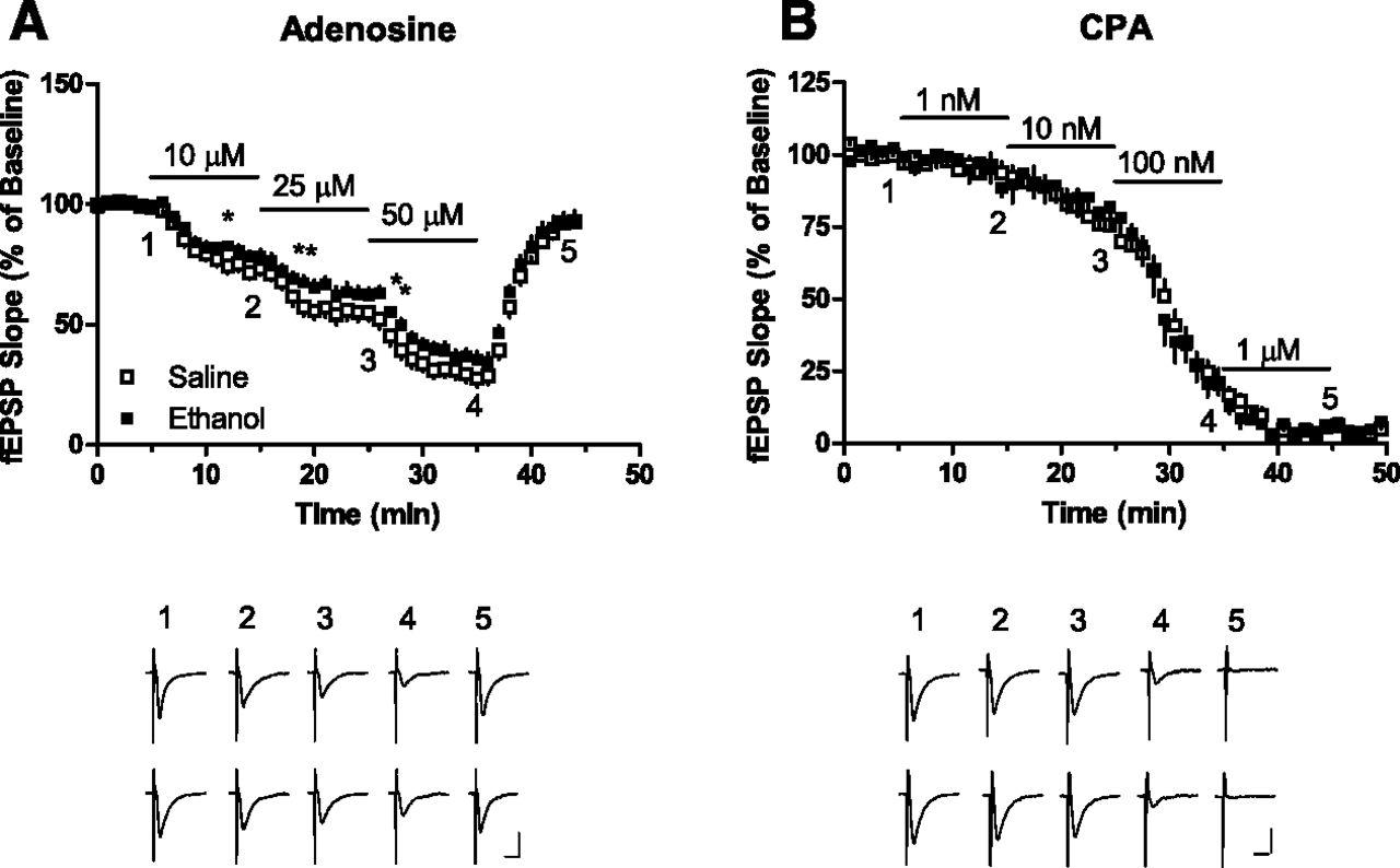 Ethanol tolerance affects endogenous adenosine signaling in mouse download figure buycottarizona