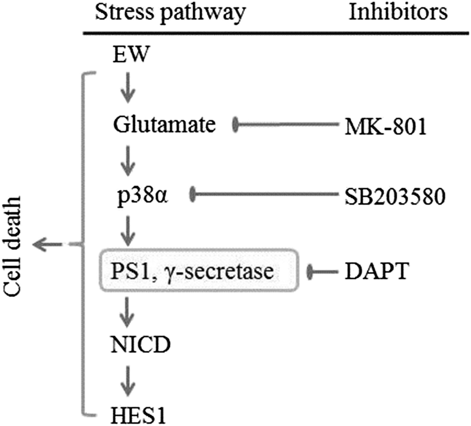 The Role of Presenilin-1 in the Excitotoxicity of Ethanol Withdrawal