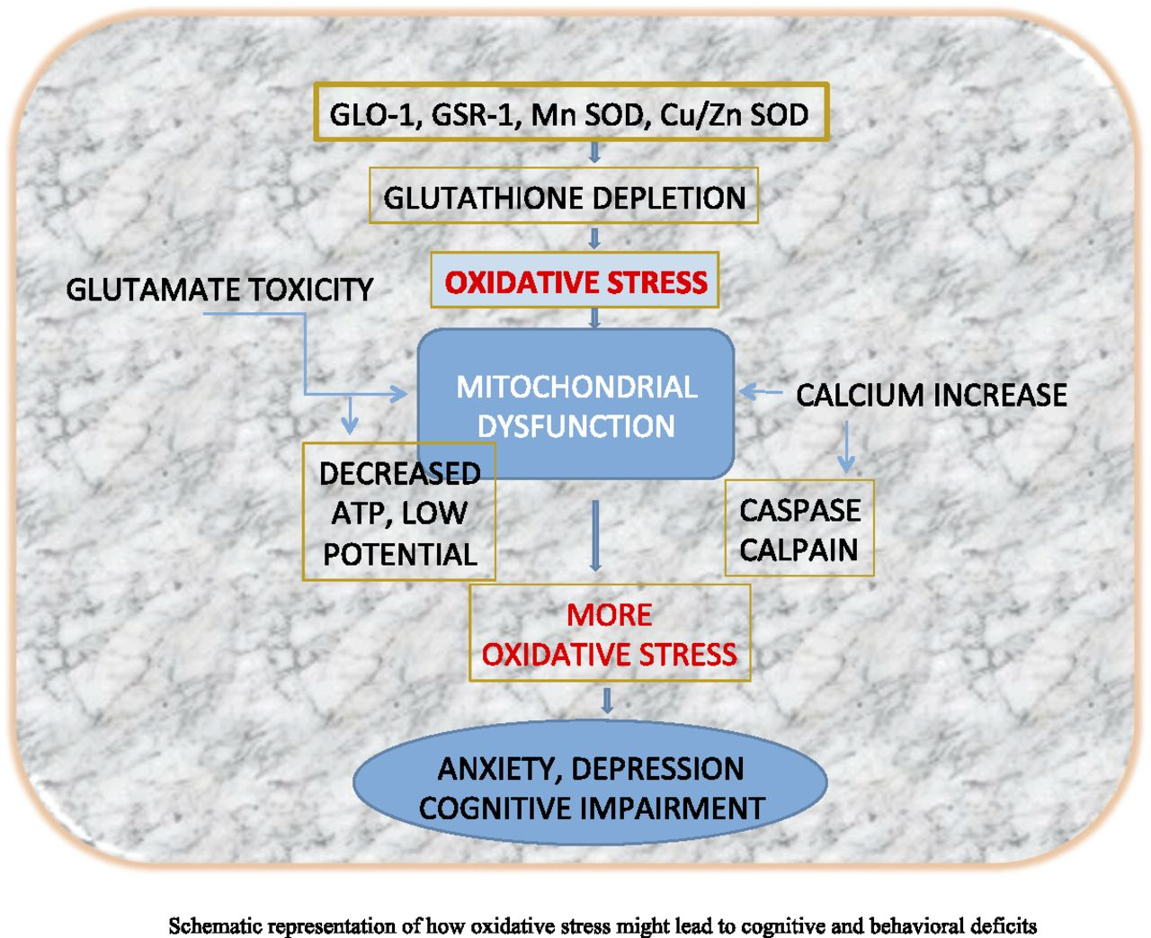 Oxidative Stress and the Central Nervous System   Journal of
