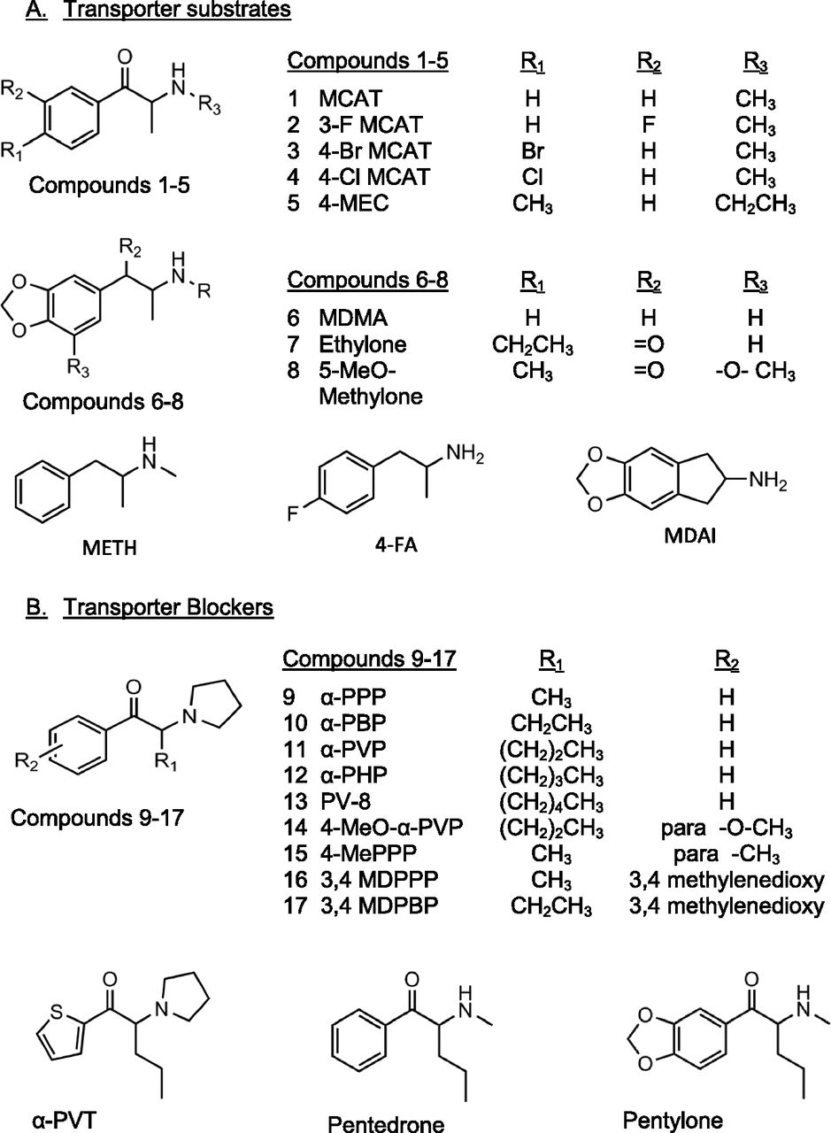 Structure-Activity Relationships of Substituted Cathinones